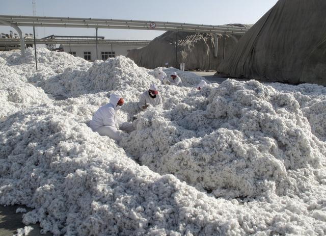 世界的なアパレルブランドのサプライチェーン(調達・供給網)が厳しい「身体検査」を受けている。米政府は、中国の新疆ウイグル自治区でウイグル族が強制労働をさせられているとの調査結果を踏まえ、同地域で生産された綿製品の輸入差し止めを開始している。写真は新疆の加工工場で、収穫したばかりの綿花にゴミがないか探す作業員ら。2015年12月撮影