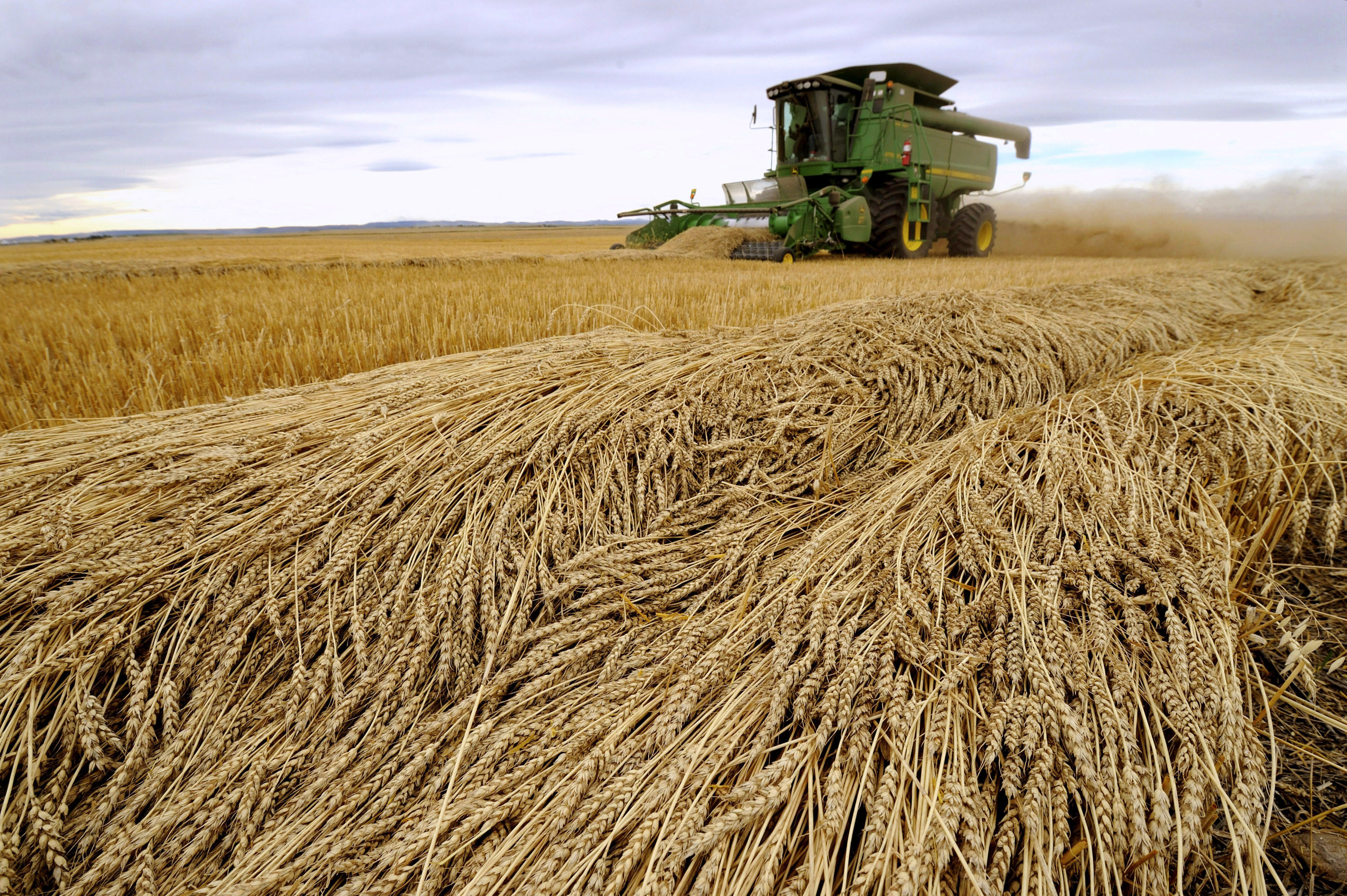 Tara Giles operates a combine as she harvests wheat on a 160-acre field located south of High River, Alberta, September 28, 2013. Alberta farmers have completed 71 percent of the harvest, the government of the Western Canadian province said on Friday in its most recent crop report as of September 24. The harvest completion by crop: spring wheat 76 percent; durum 84 percent; barley 74 percent; canola 60 percent. REUTERS/Mike Sturk (CANADA - Tags: AGRICULTURE BUSINESS COMMODITIES FOOD TPX IMAGES OF THE DAY) - GM1E99T0VNI01