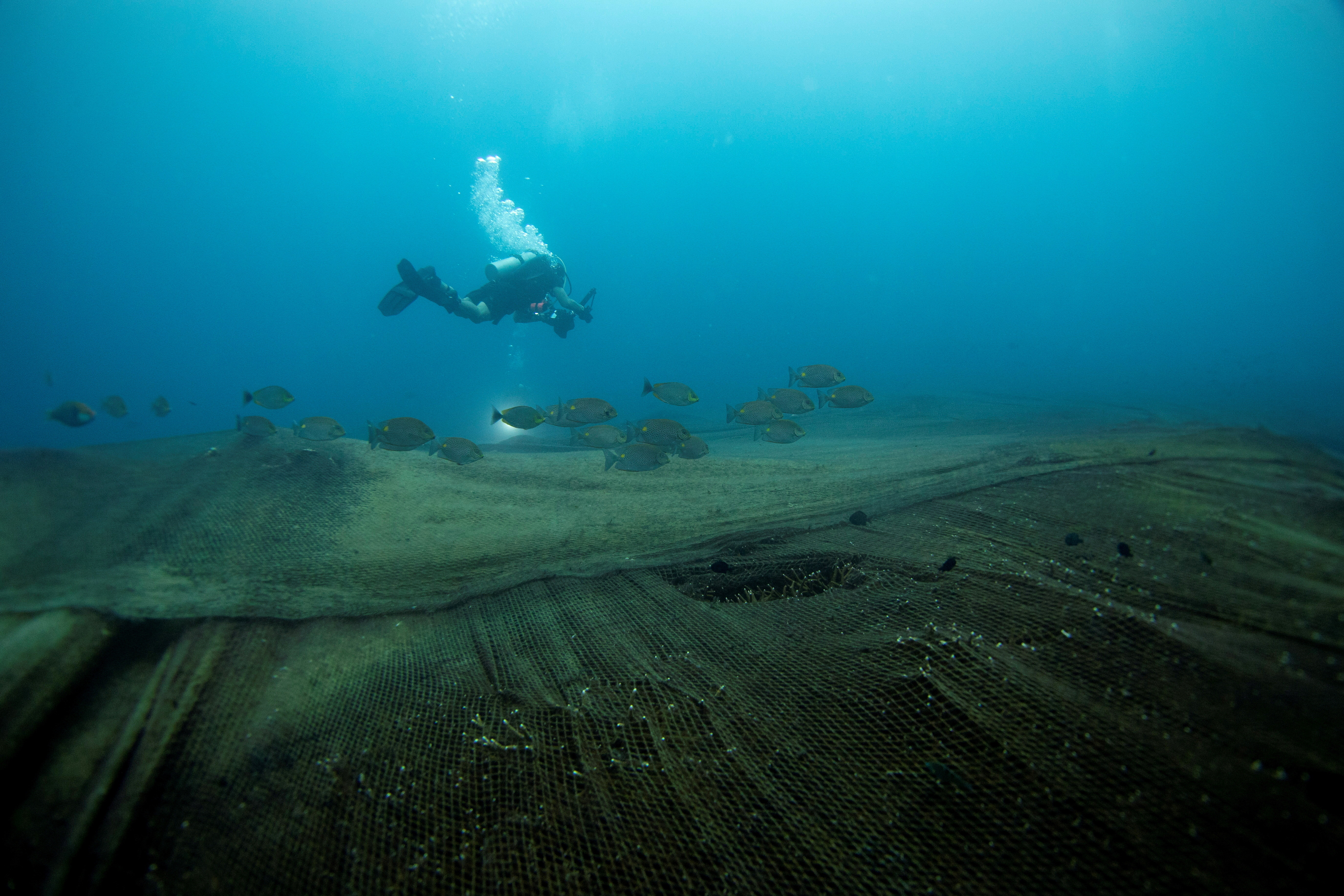 a picture of a diver swimming over the ocean floor