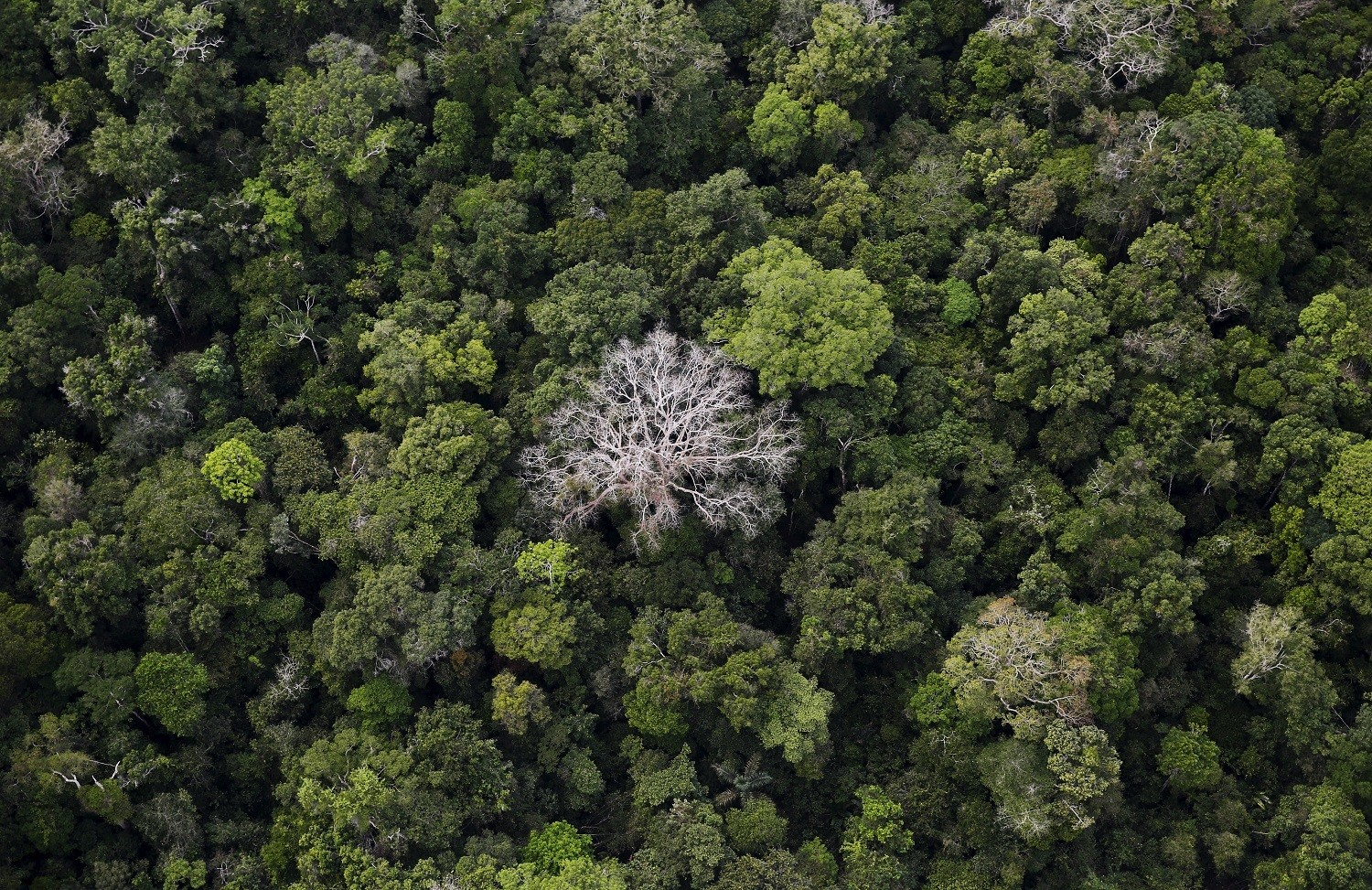 "An aerial view shows the Amazon rainforest at the Bom Futuro National Forest near Rio Pardo in Porto Velho, Rondonia State, Brazil, September 3, 2015. The town of Rio Pardo, a settlement of about 4,000 people in the Amazon rainforest, rises where only jungle stood less than a quarter of a century ago. Loggers first cleared the forest followed by ranchers and farmers, then small merchants and prospectors. Brazil's government has stated a goal of eliminating illegal deforestation, but enforcing the law in remote corners like Rio Pardo is far from easy. REUTERS/Nacho Doce   TPX IMAGES OF THE DAYPICTURE 1 OF 40 FOR WIDER IMAGE STORY ""EARTHPRINTS: RIO PARDO"" SEARCH""EARTHPRINTS PARDO"" FOR ALL IMAGES   - GF20000046394"