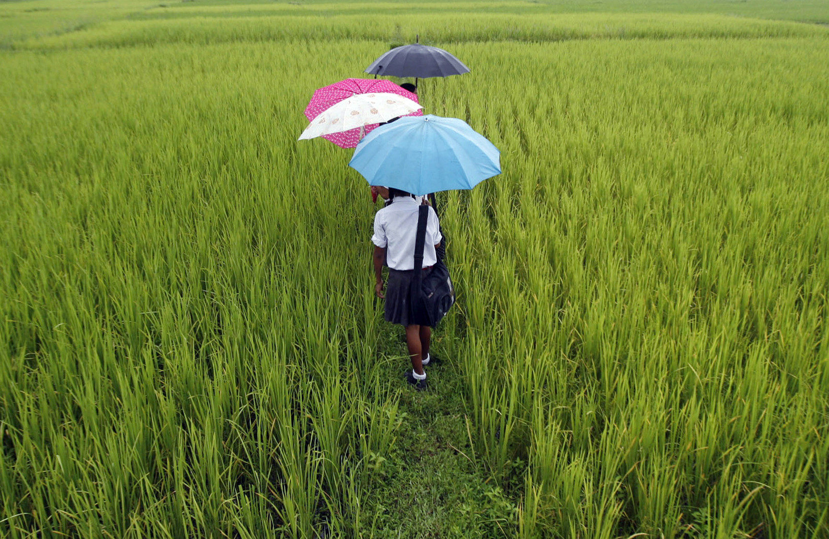 School children walk through a field at Koribari village on the outskirts of the northeastern Indian city of Siliguri August 25, 2008. Indian corn futures may trade higher on Monday with record exports and a lower acreage supporting and better-than-expected crop, aided by late rains, weighing, analysts said. REUTERS/Rupak De Chowdhuri (INDIA) - GM1E48Q0J6F01