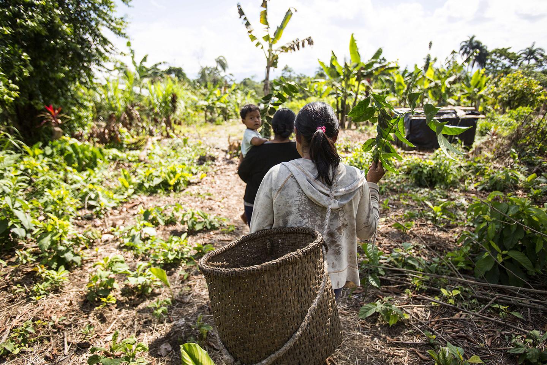 climate-smart agriculture Indonesia Rainforest Alliance