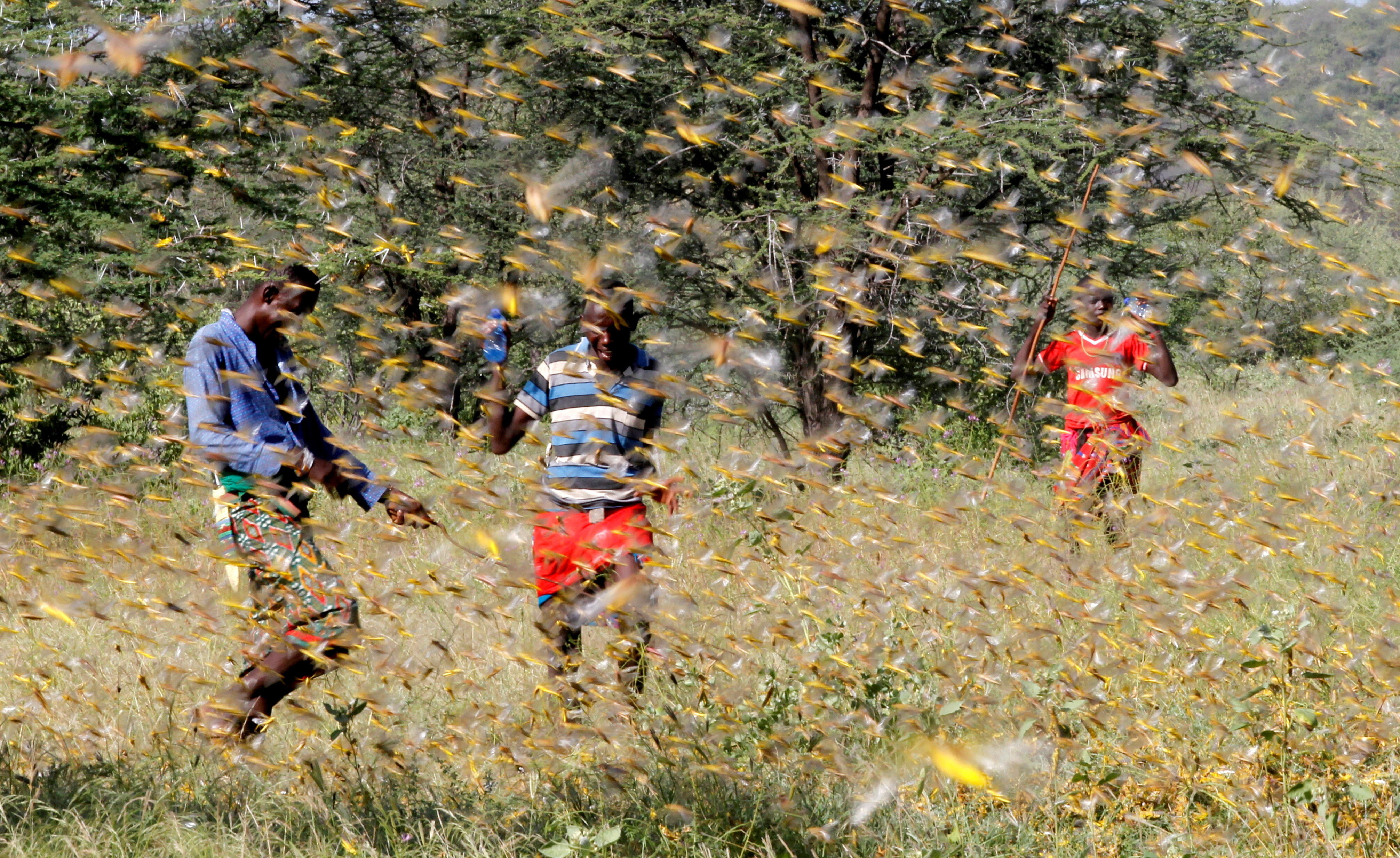 a group of men fight through a swarm of locusts.