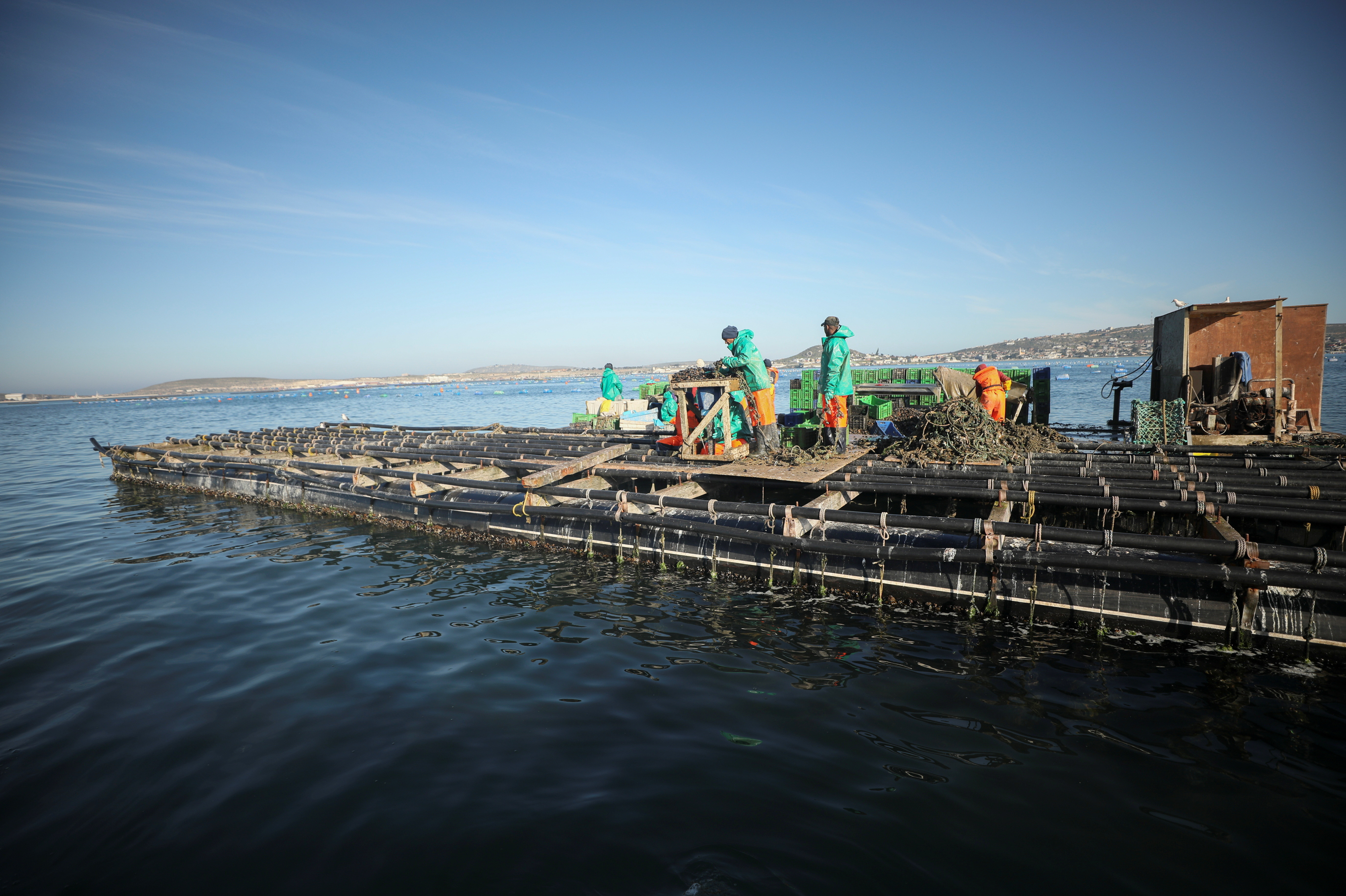 Workers aboard an aquaculture raft sort mussels and oysters in Saldanha Bay near Cape Town, South Africa, June 15, 2021. Picture taken June 15, 2021. REUTERS/Mike Hutchings - RC2Y0O9HY3O0