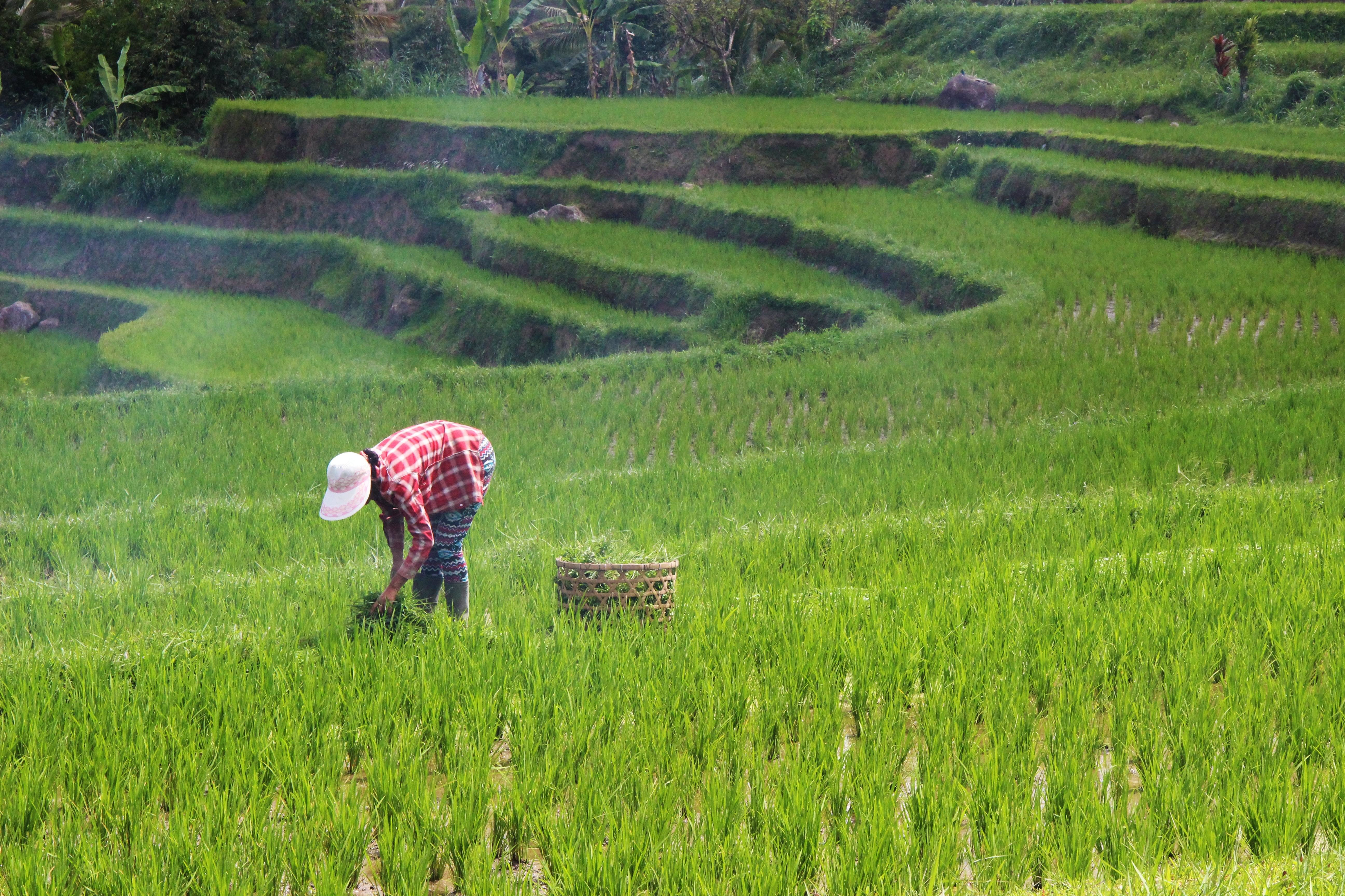 The World Economic Forum's 100 Million Farmers platform aims to help transition one in every five farmers to create a tipping point for the sector.