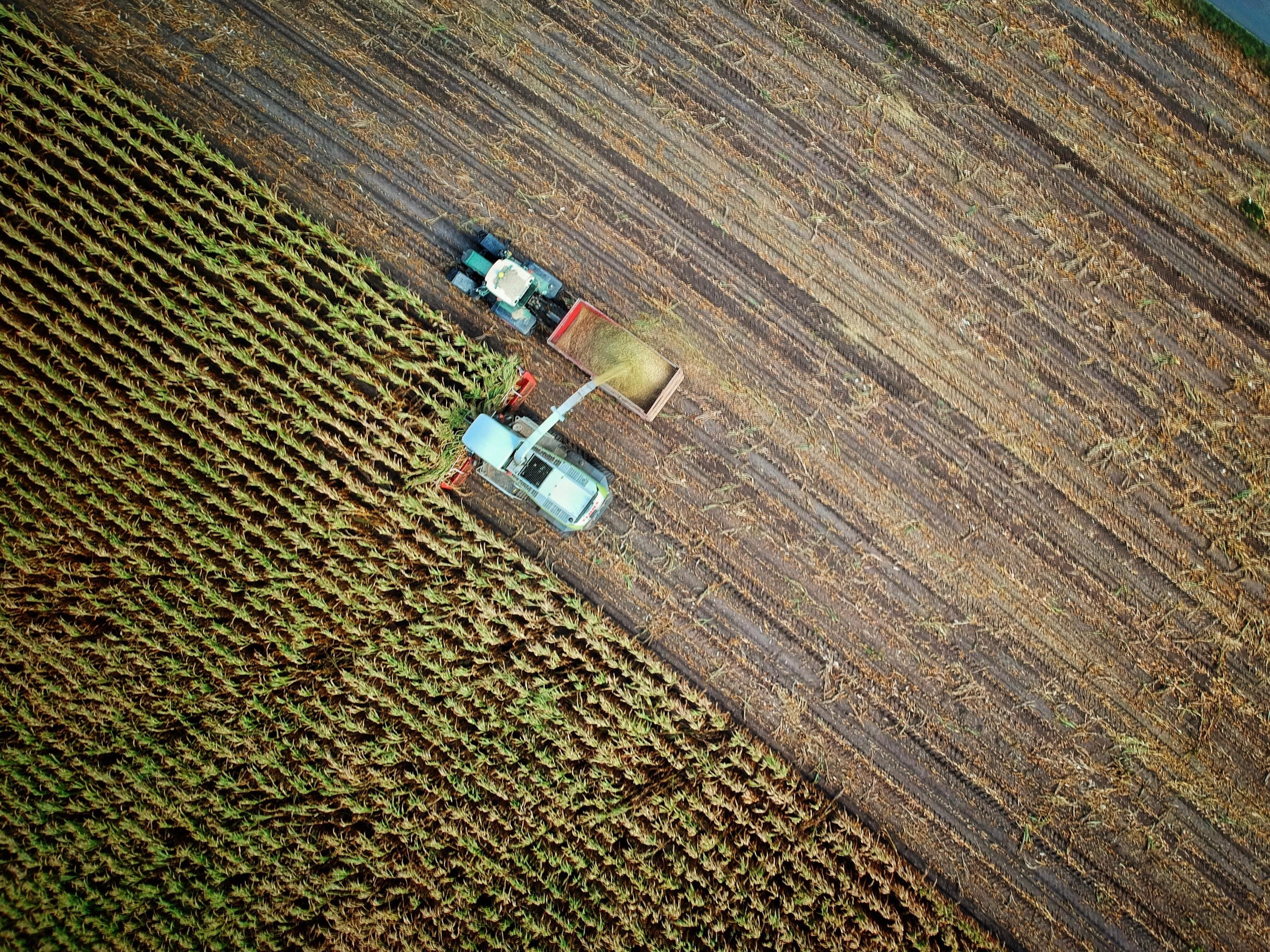 A picture of a tractor harvesting crops