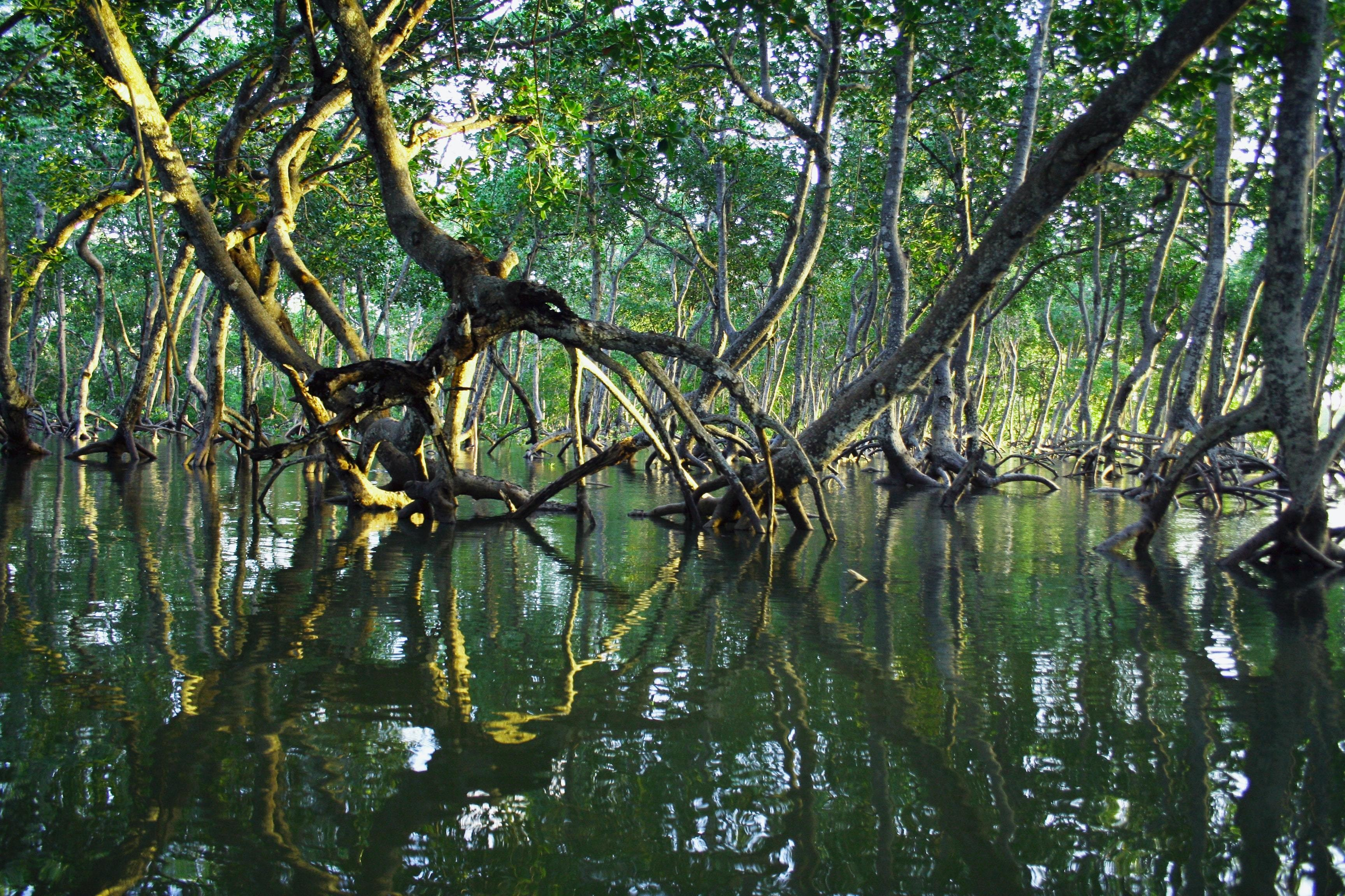 these are mangrove trees, which have the potential to retain NO2 from the ocean and help the environment