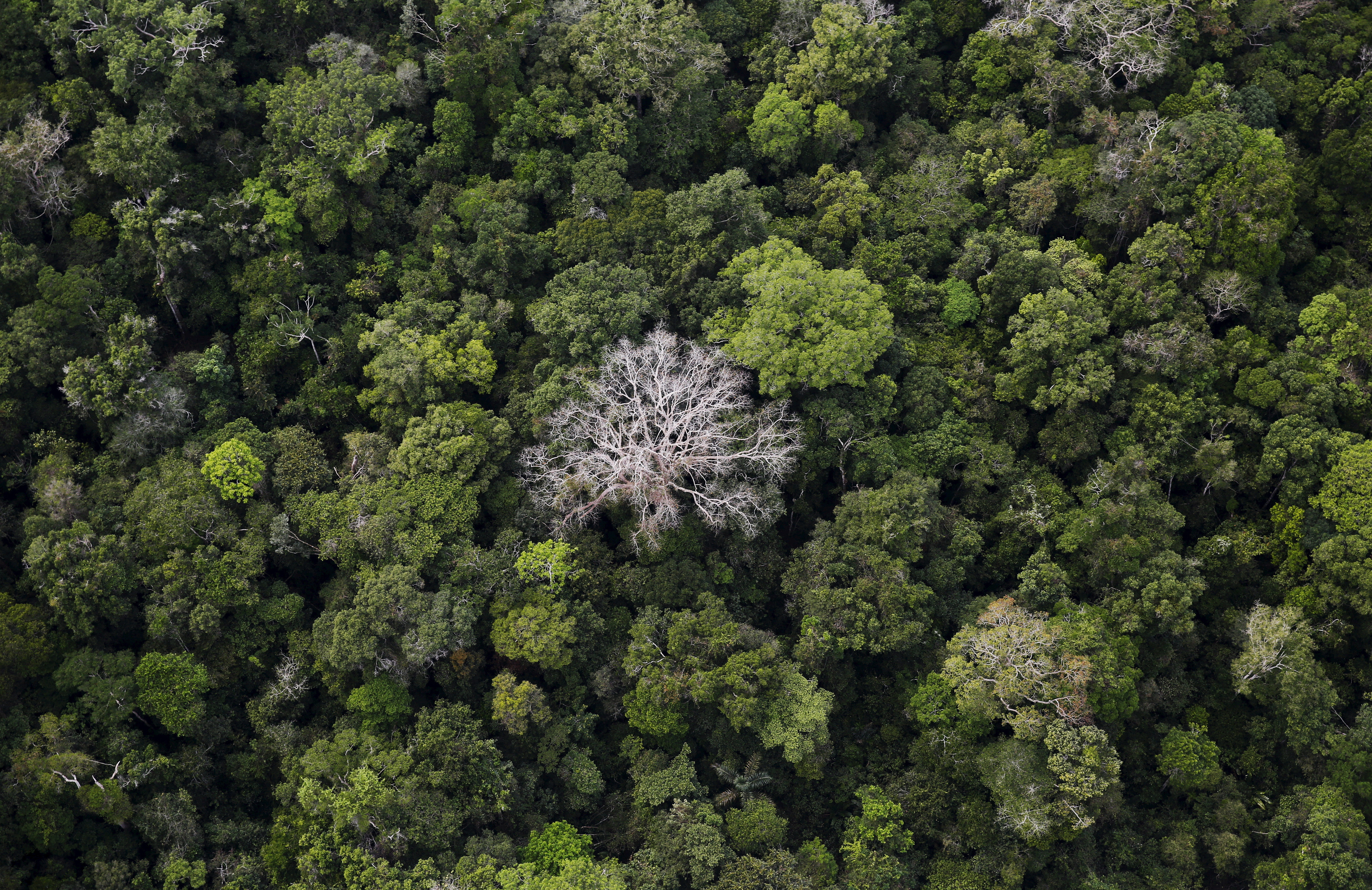 An aerial view shows the Amazon rainforest at the Bom Futuro National Forest near Rio Pardo in Porto Velho, Rondonia State, Brazil, September 3, 2015. The town of Rio Pardo, a settlement of about 4,000 people in the Amazon rainforest, rises where only jungle stood less than a quarter of a century ago. Loggers first cleared the forest followed by ranchers and farmers, then small merchants and prospectors. Brazil's government has stated a goal of eliminating illegal deforestation, but enforcing the law in remote corners like Rio Pardo is far from easy. REUTERS/Nacho Doce