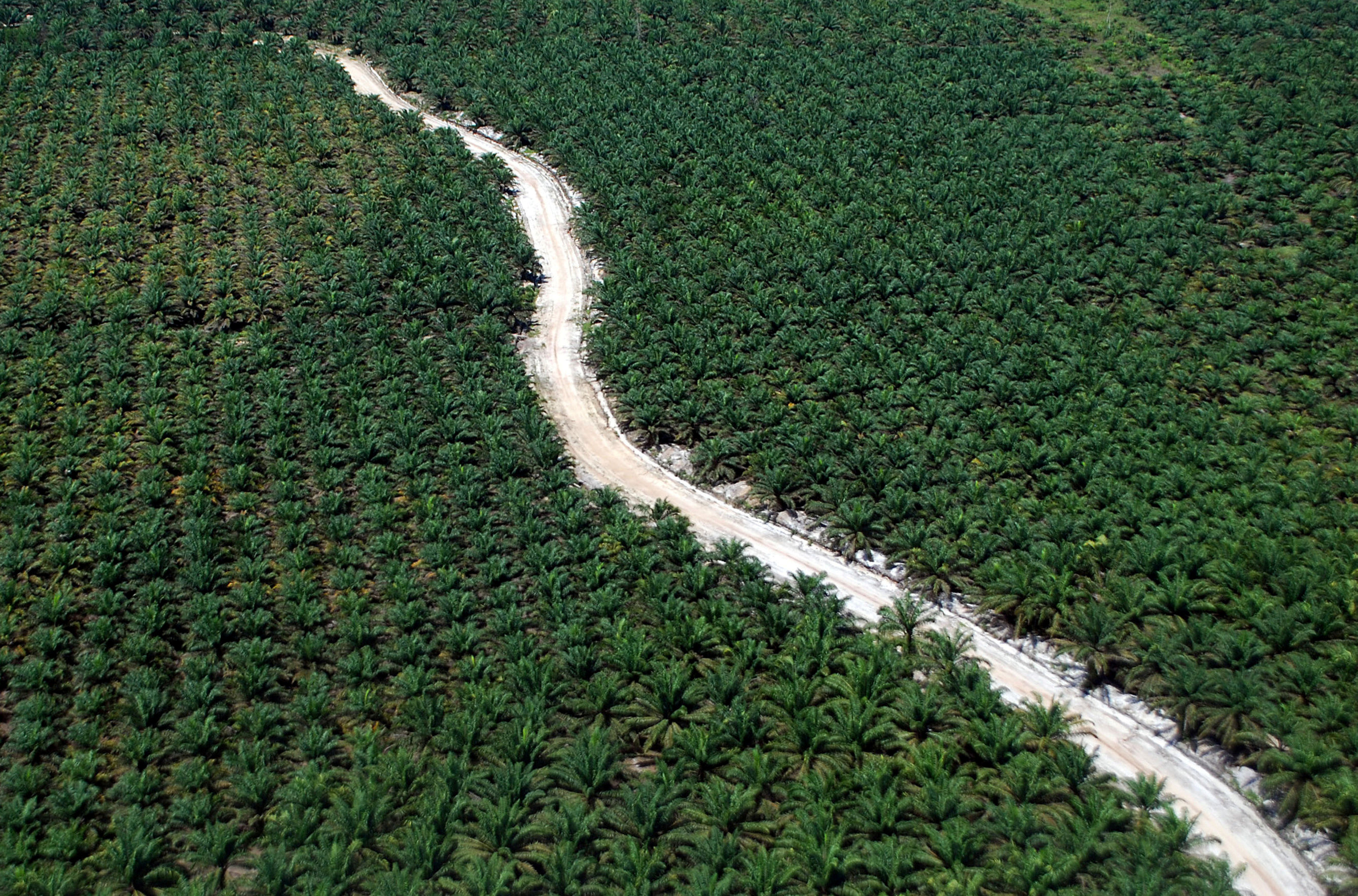 An aerial photo of a road running through an palm plantation in Dumai, Riau, Sumatra island, Indonesia, August 9, 2016 in this photo taken Antara Foto. Picture taken August 9, 2016. Antara Foto/Rony Muharrman/via REUTERS/File ATTENTION EDITORS - THIS IMAGE WAS PROVIDED BY A THIRD PARTY. FOR EDITORIAL USE ONLY. MANDATORY CREDIT. INDONESIA OUT. - RC11A44C47B0