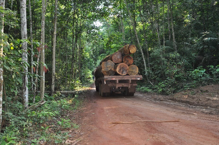 A truck carrying trees that have been felled by loggers, to be used for timber.