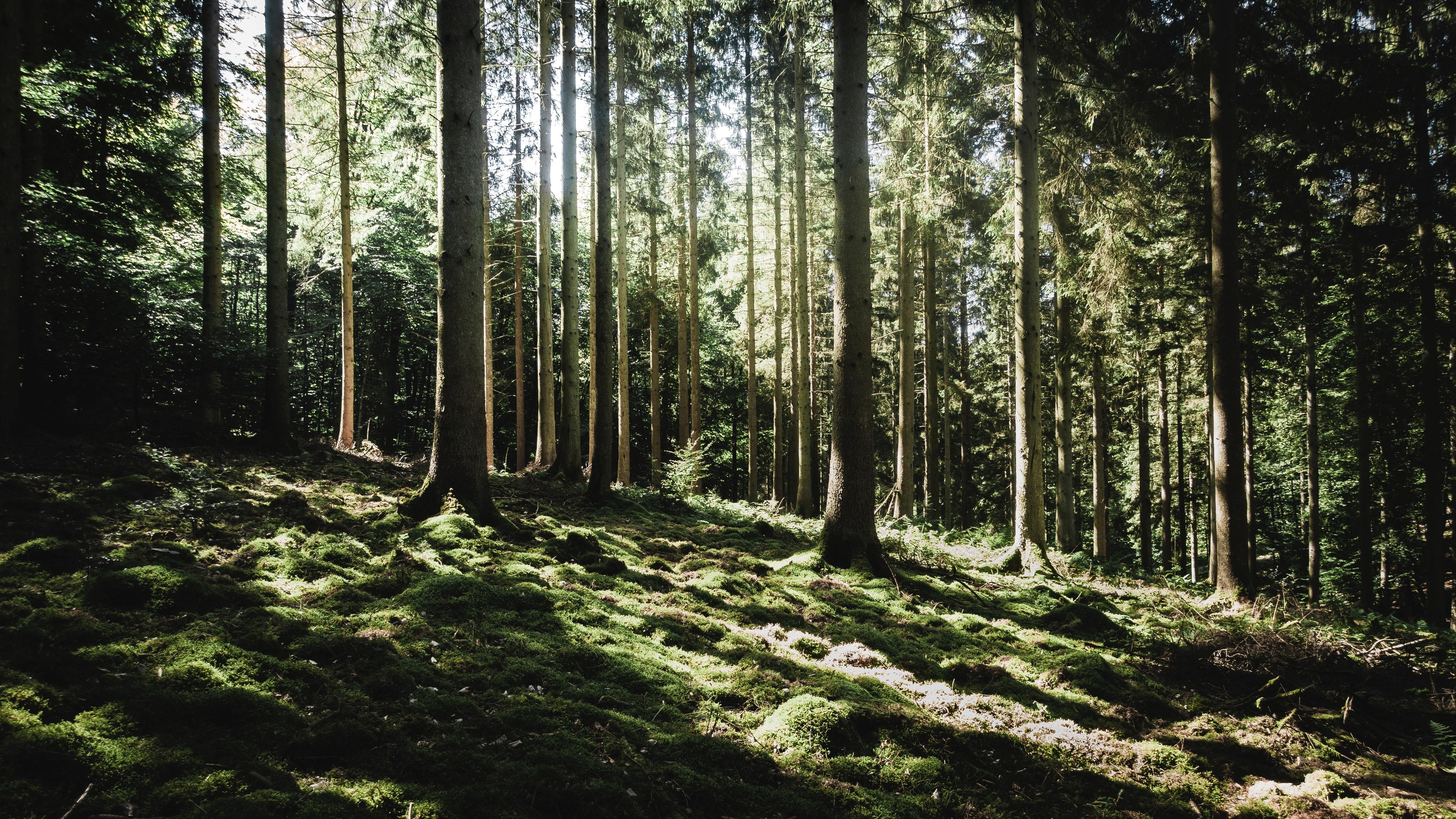 Forest in Libin, Belgium. Image: Frédéric Perez on Unsplash