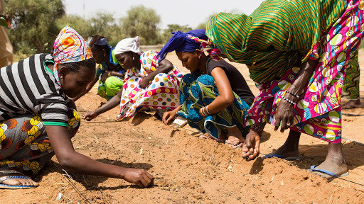 Image of women sewing seeds in the Sahel