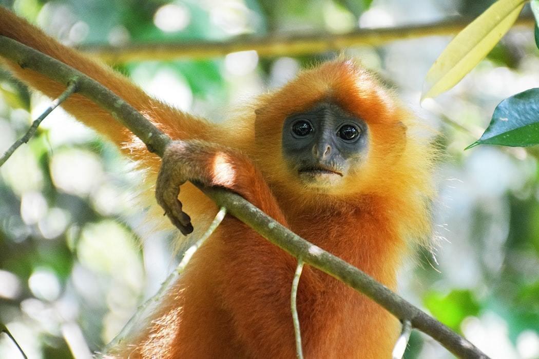 Monkey seen sitting in a tree.