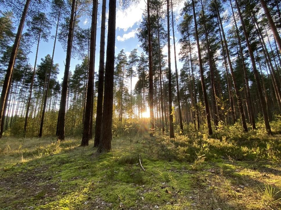 Forests rehabilitation environment conservation