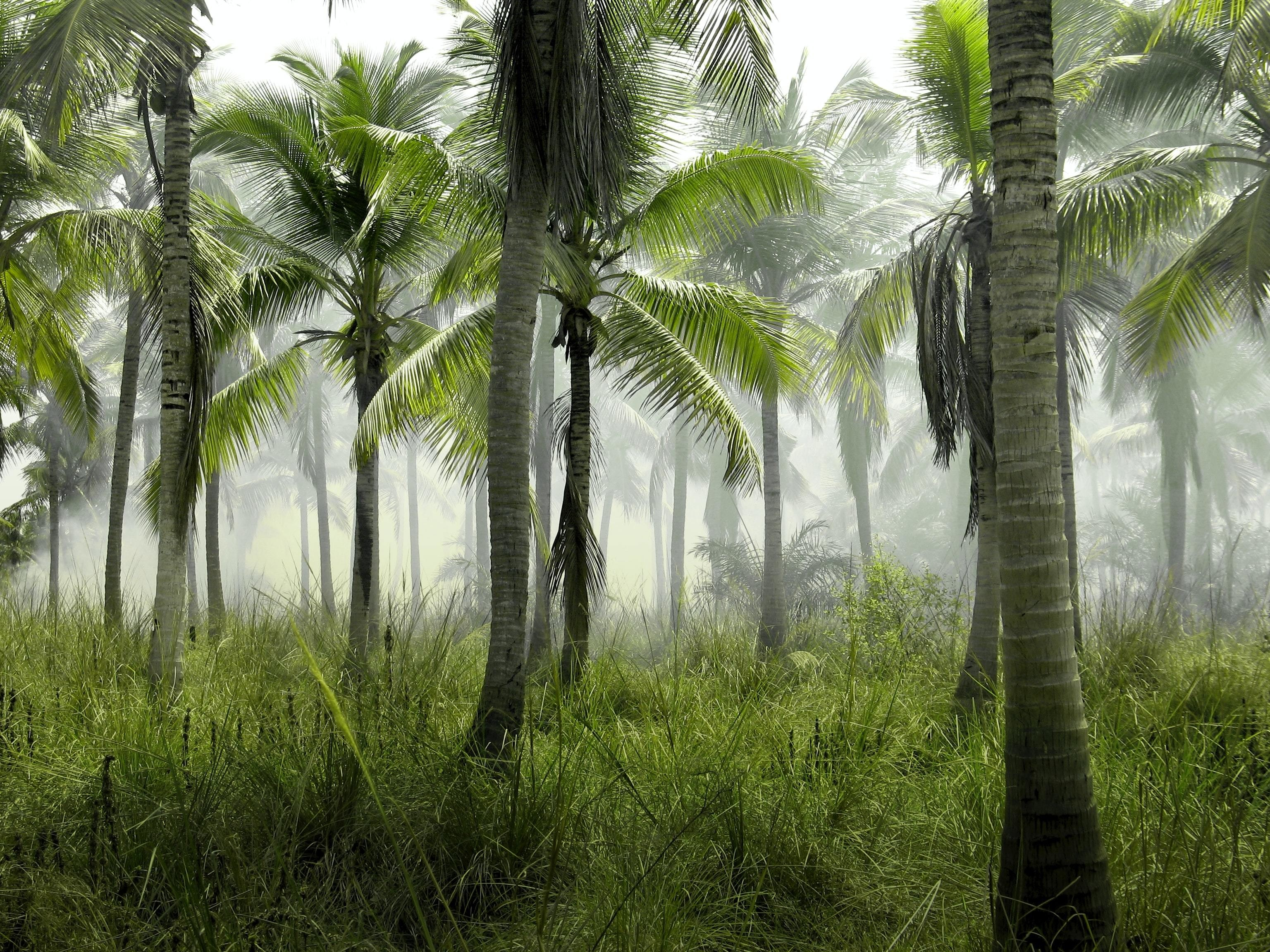 a picture of some palm trees
