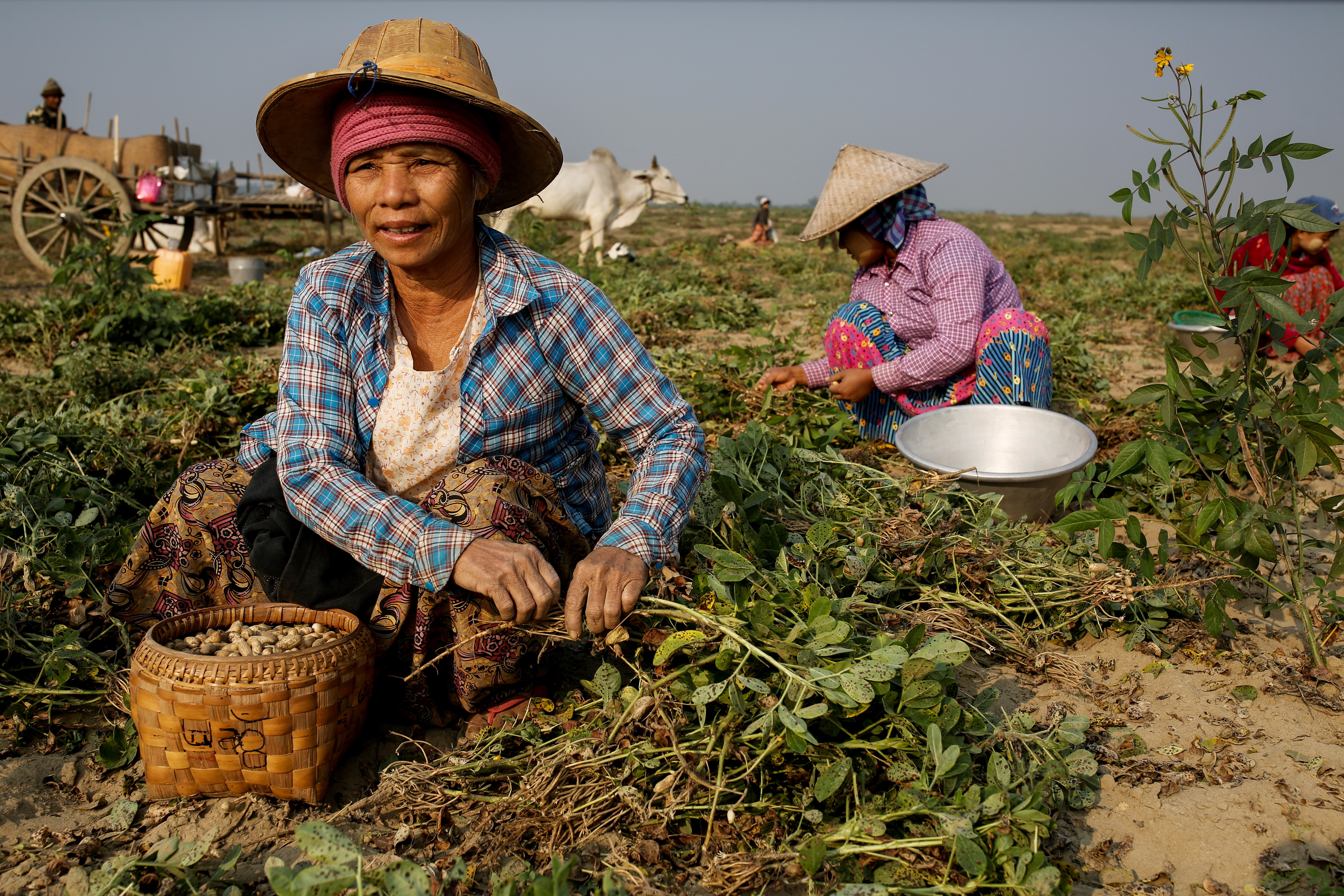"""Mya Lay (R), 25, and her colleagues, who used to work at a marble mine but lost their jobs, pick leftover peanuts at a farm where they now work in Sagyin, Mandalay, Myanmar, February 15, 2019. """"I was born in this village and for generations this is what we have done: the men work on marble carving and the women work in the marble mines or polish the marble statues,"""" said Lay. REUTERS/Ann Wang     SEARCH """"SAGYIN MARBLE"""" FOR THIS STORY. SEARCH """"WIDER IMAGE"""" FOR ALL STORIES. - RC20LH9Q2I4O"""