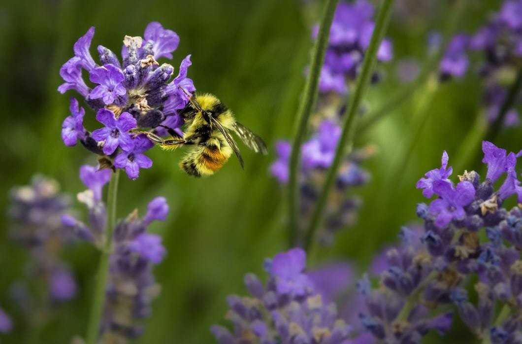 image of a bee on some flowers