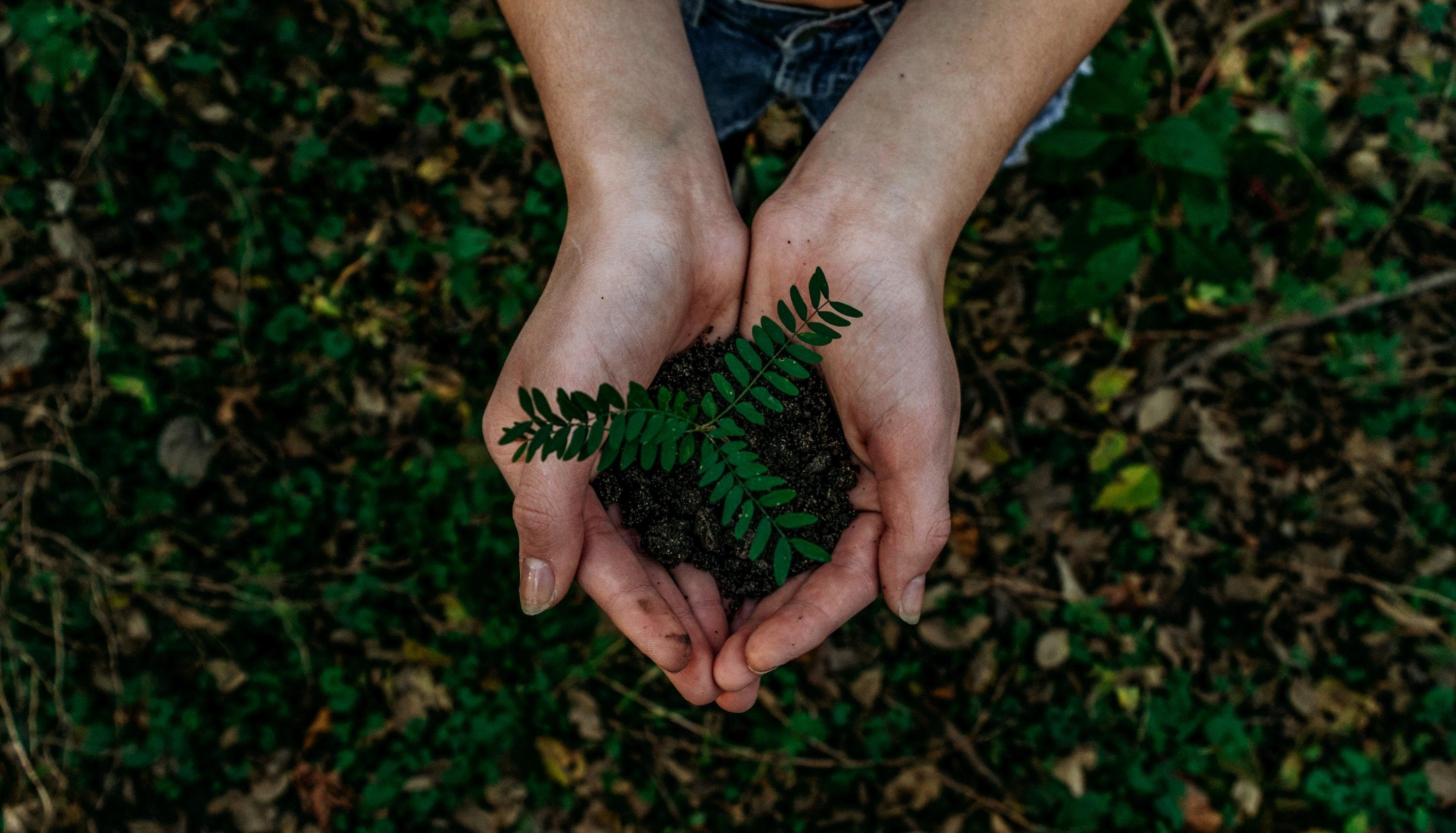 Woman holding green sapling in her hands.