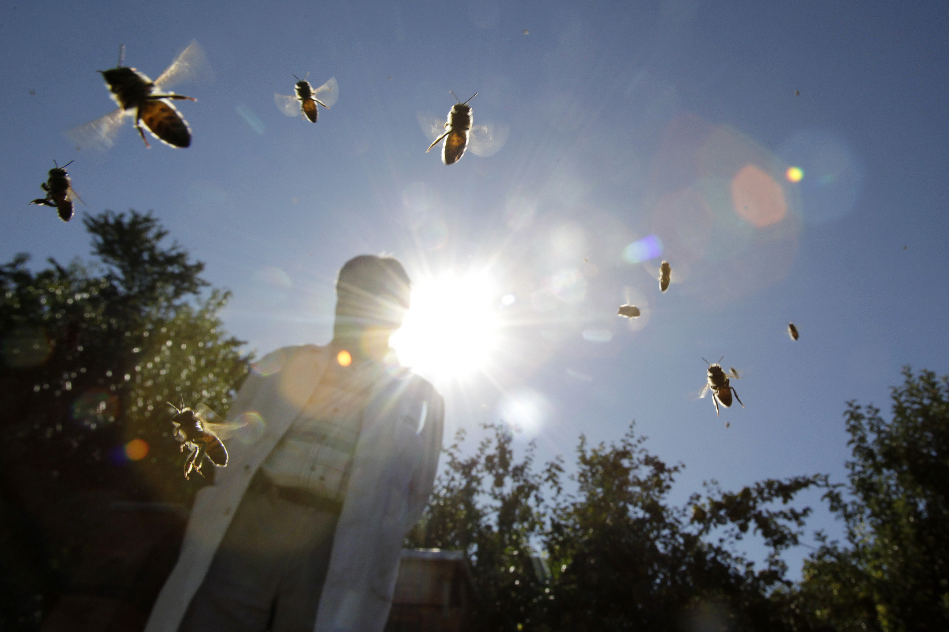 bees fly next to a beekeeper on a sunny day