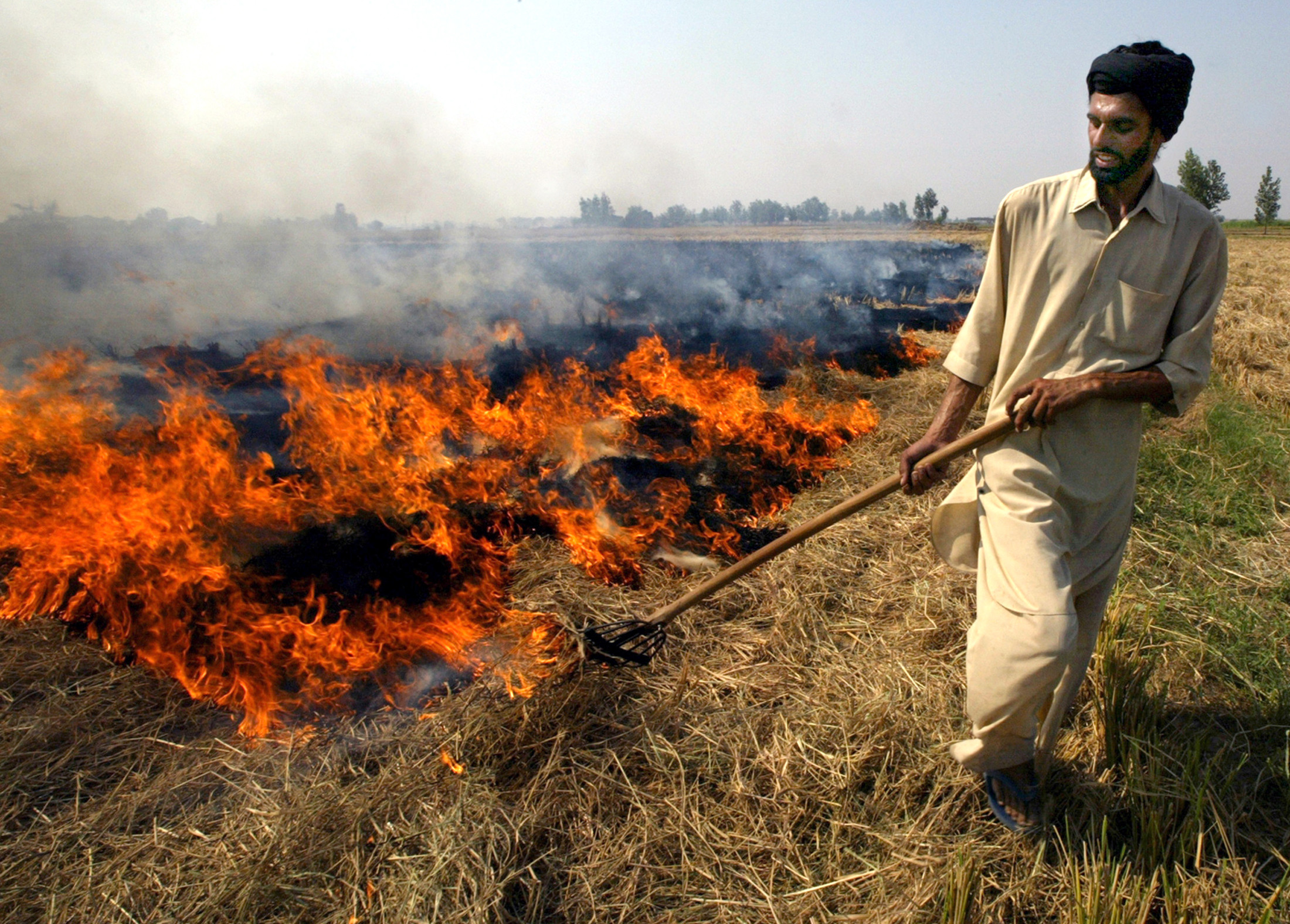 An Indian farmer burns paddy husks after a harvest in the northernIndian city of Chandigarh, October 21, 2003. India expects a bumpergrains and oilseeds crop this winter season following the best monsoonin five years, but analysts said the government's outlook seemed toooptimistic. REUTERS/Kamal KishoreAH/DL - RP4DRHYYCIAA