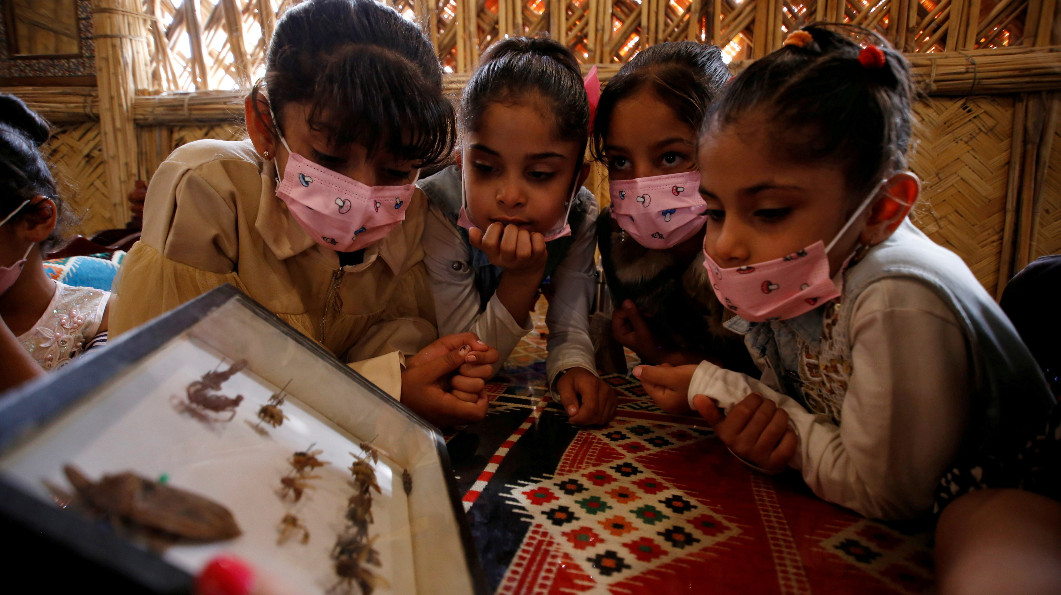 a group of children look at a display box filled with insects
