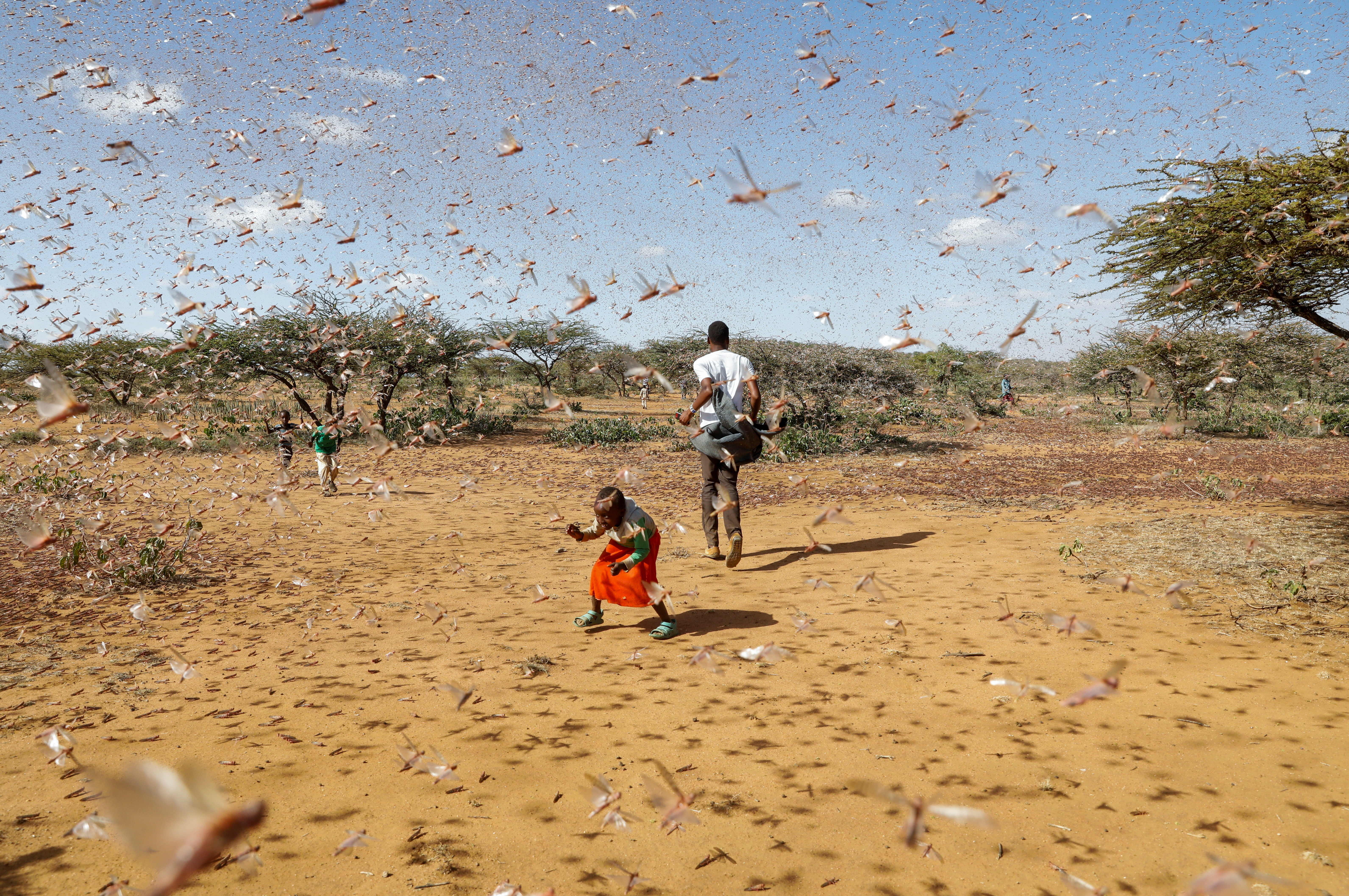 A child tries to chase away a swarm of desert locusts in Naiperere, near the town of Rumuruti, Kenya, January 30, 2021.