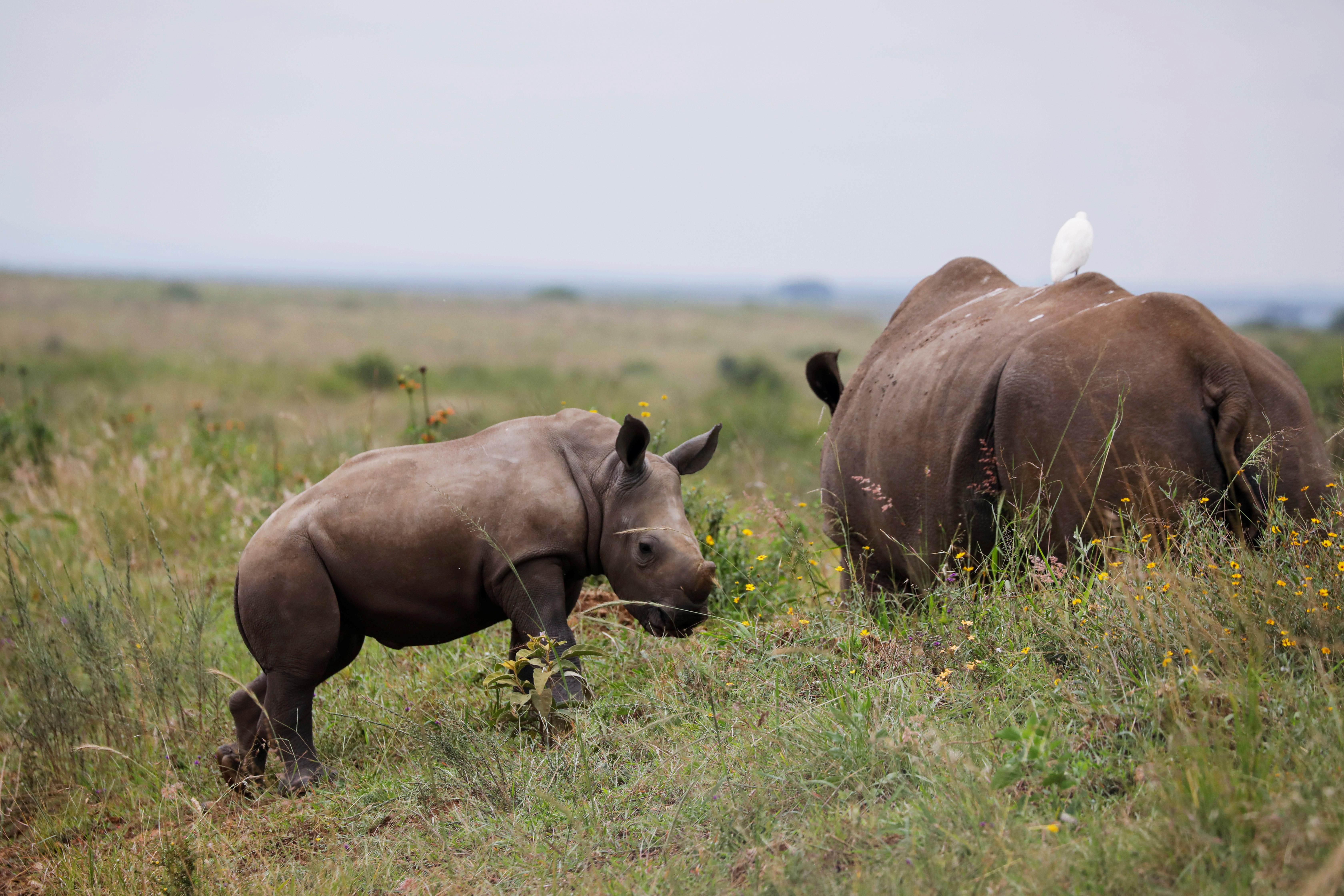 Extinction biodiversity environment nature animal welfare