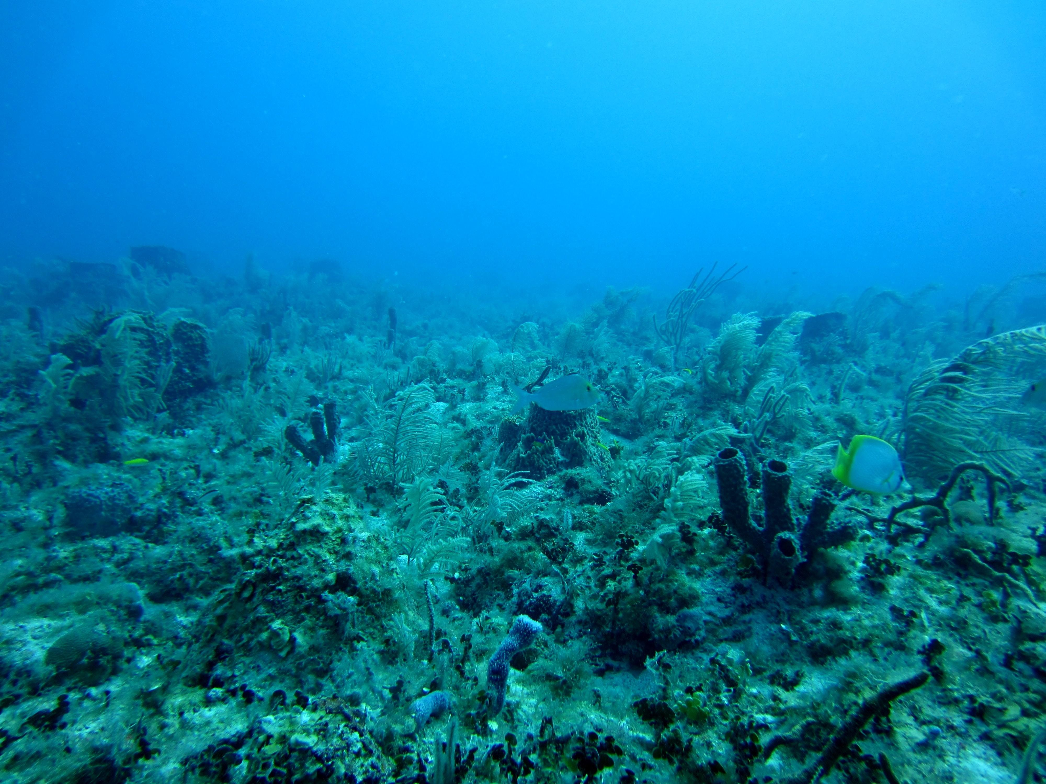 Algae, shown here alongside fish on the seafloor, helps transport carbon to the depths of the ocean.