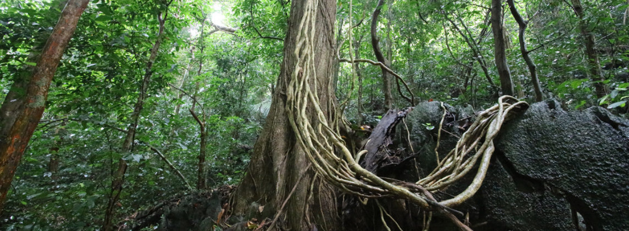 image of a rainforest in Cuc Phuong National Park, Vietnam