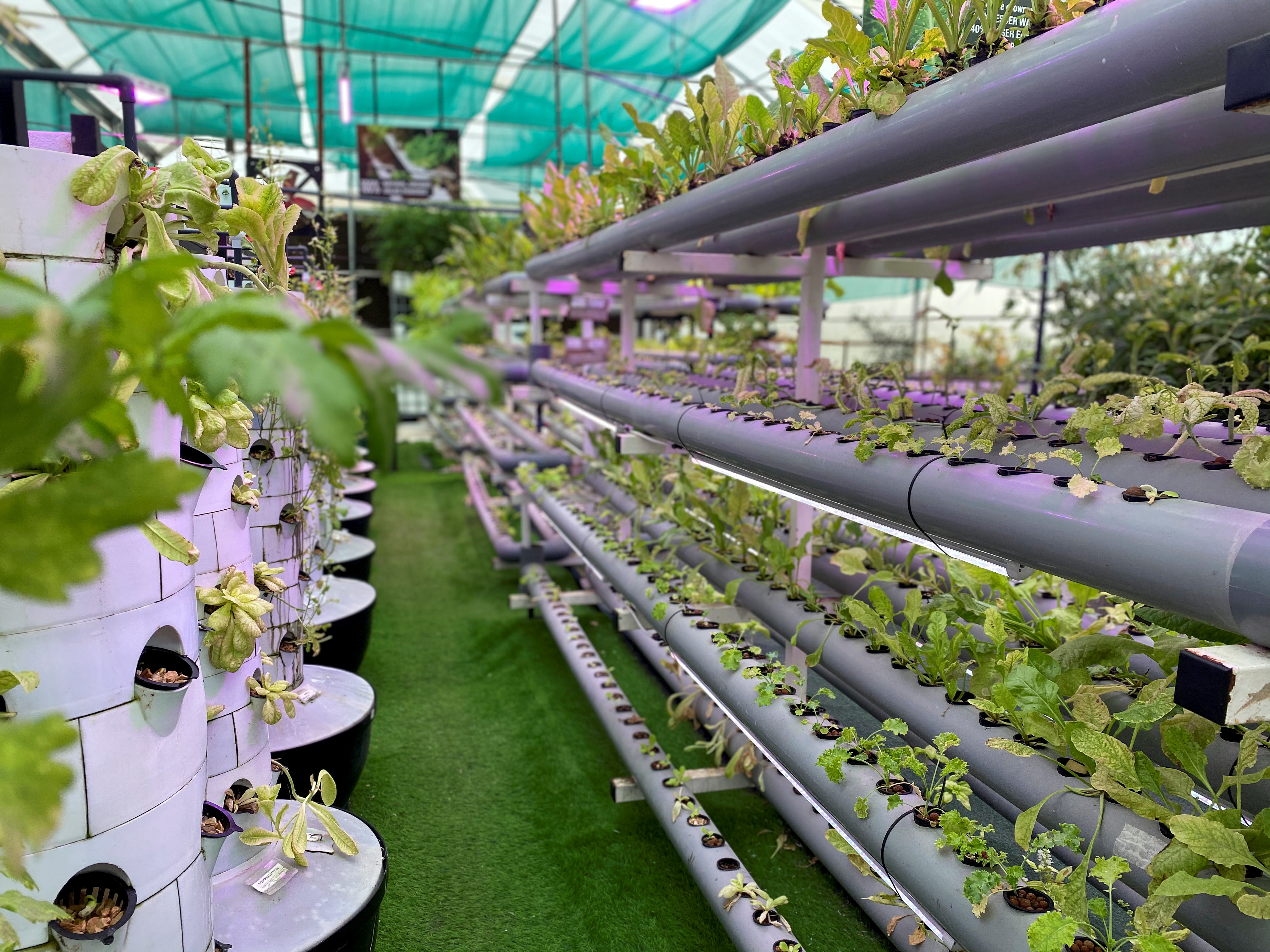 Vista general de una granja vertical de alta tecnología donde los agricultores locales tienen la oportunidad de cultivar sus cultivos.