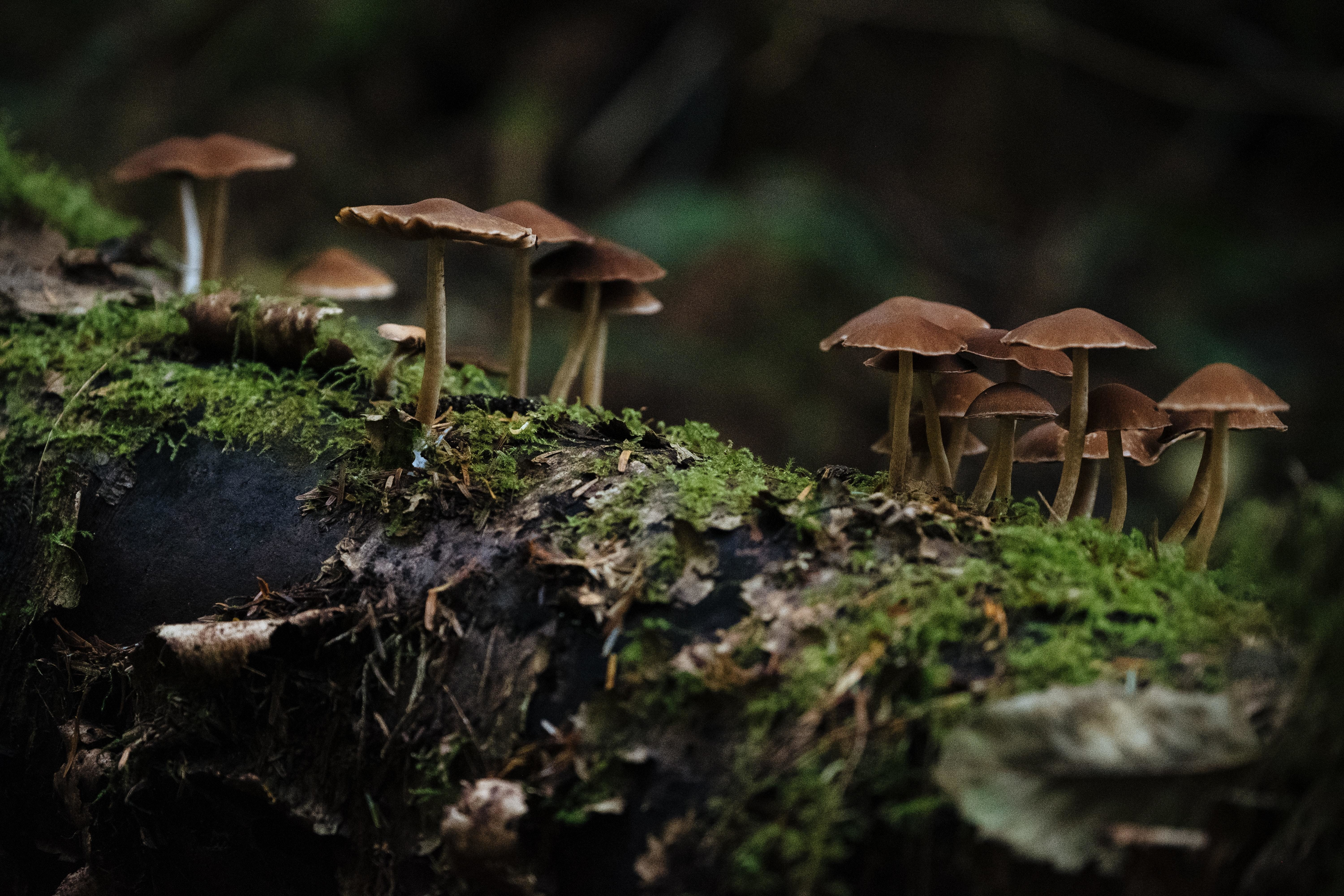 mushrooms are seen in a forest