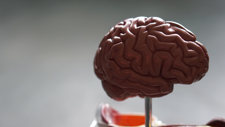 brain neuroscience science biology COVID-19