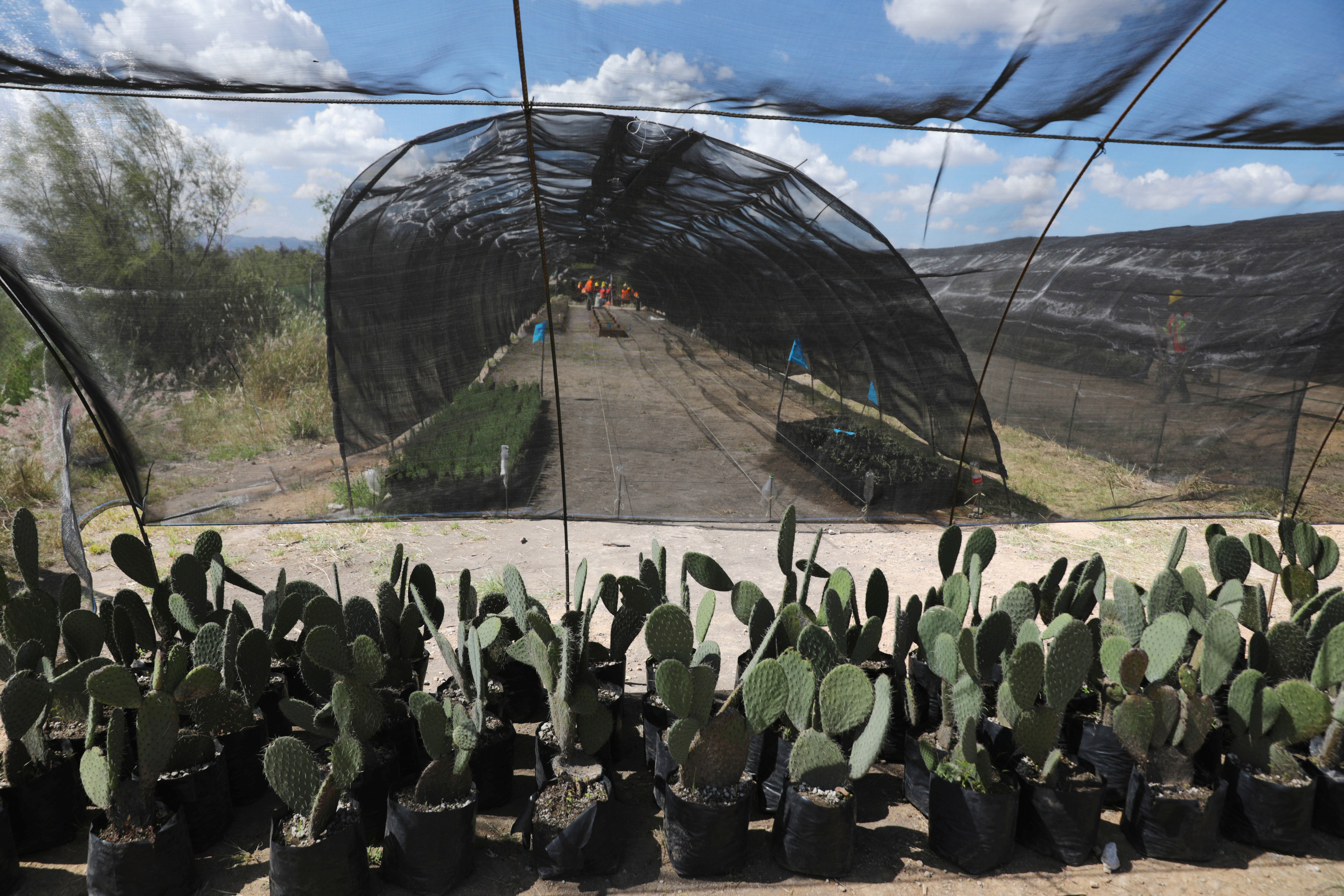 Workers prepare plants in an area near the canceled airport zone that is part of a project to conserve 12,200 hectares of land in Texcoco on the outskirts of Mexico City, Mexico September 3, 2020. Picture taken September 3, 2020. REUTERS/Henry Romero - RC2VTI98YDRK