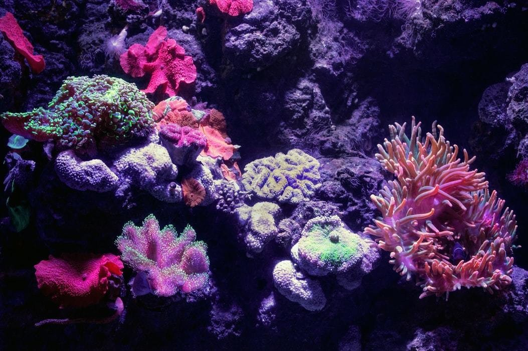The bioluminescent coral tank at the Cairns aquarium.