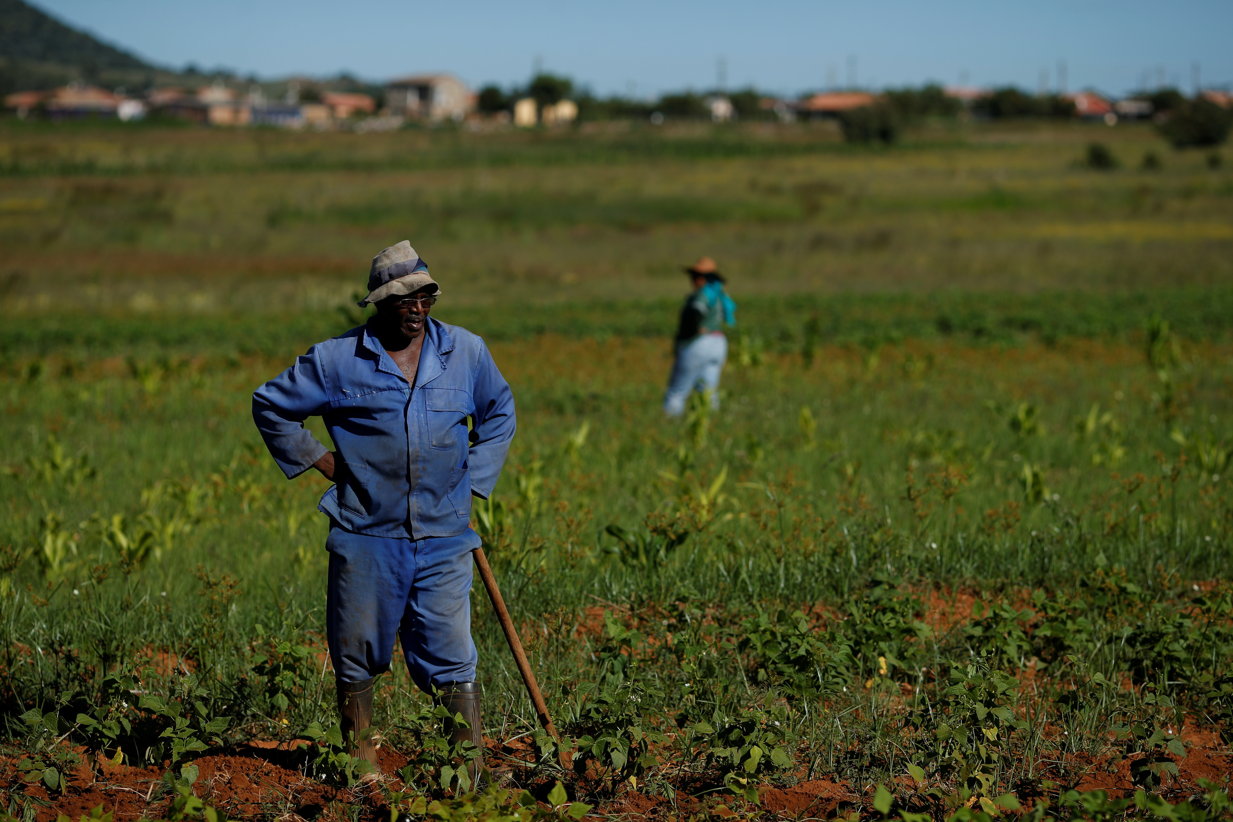 image of a farmer in South Africa standing amongst crops