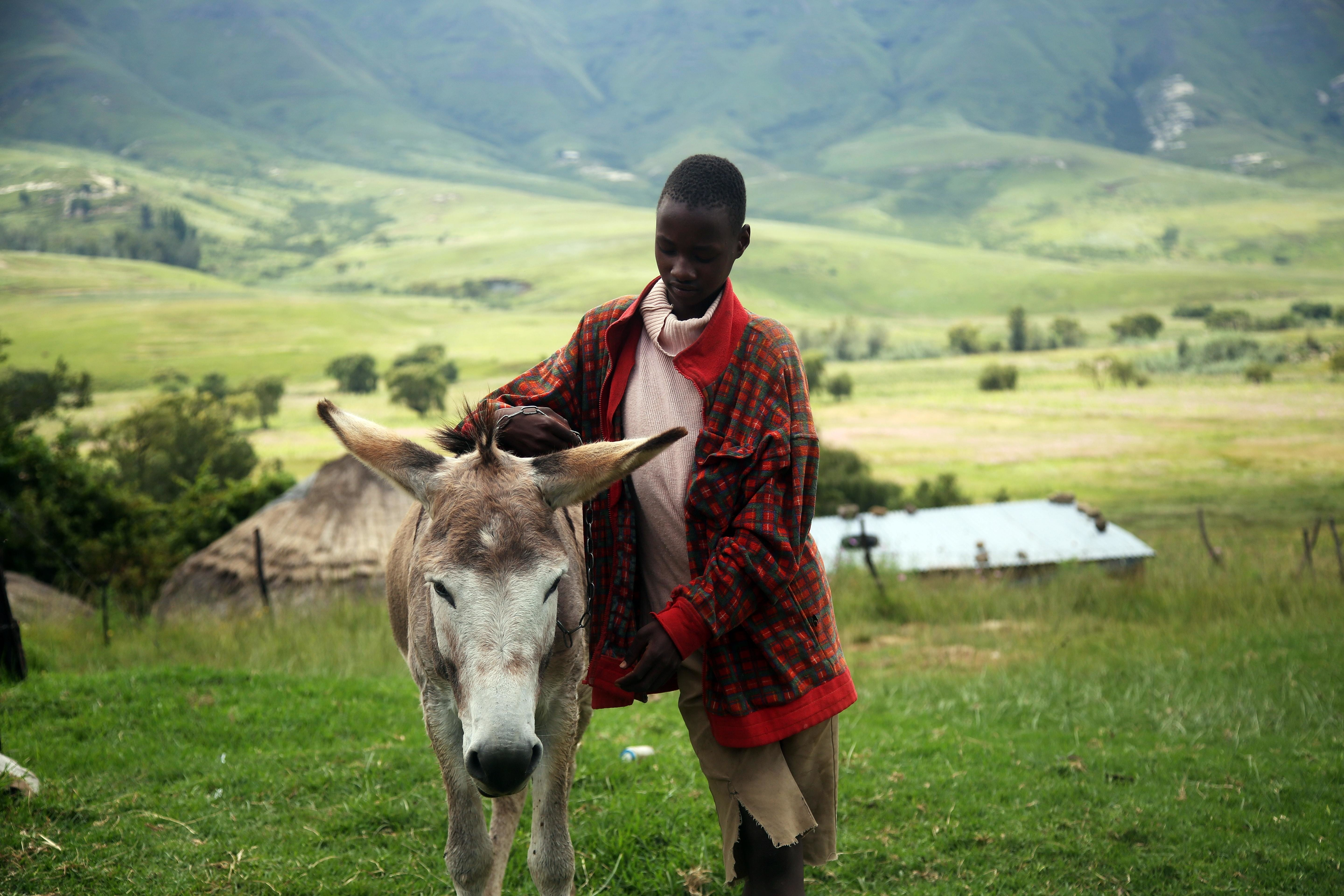 Farmers in South Africa, like this one here with a donkey, need more urgent agricultural support due to climate change.