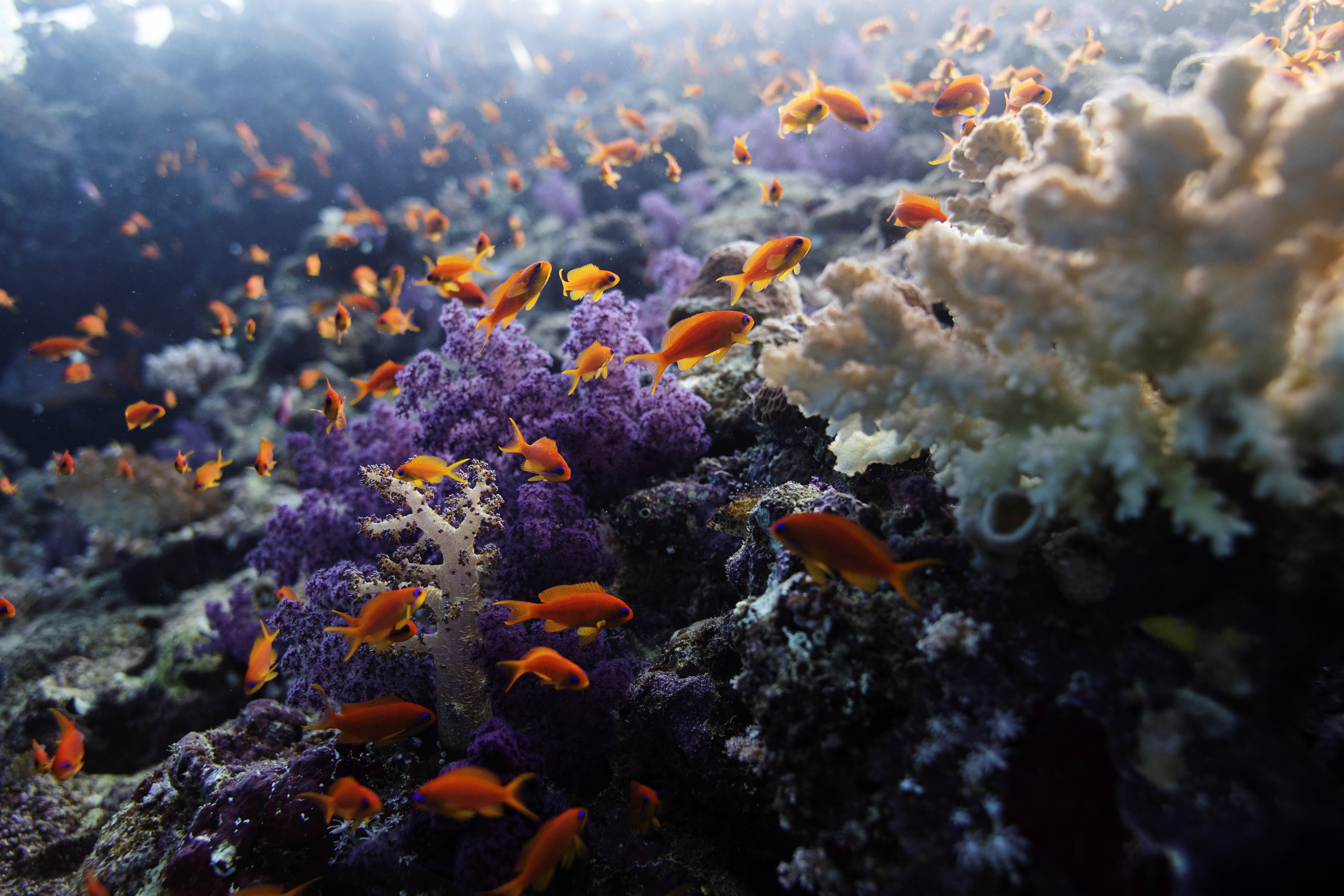 fish swim about in coral under the sea. over the next 20 years, we could lose 90% of all coral reefs.