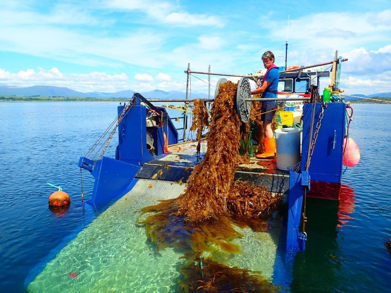 Marine Scientist Dr. Adrian Macleod harvesting seaweed
