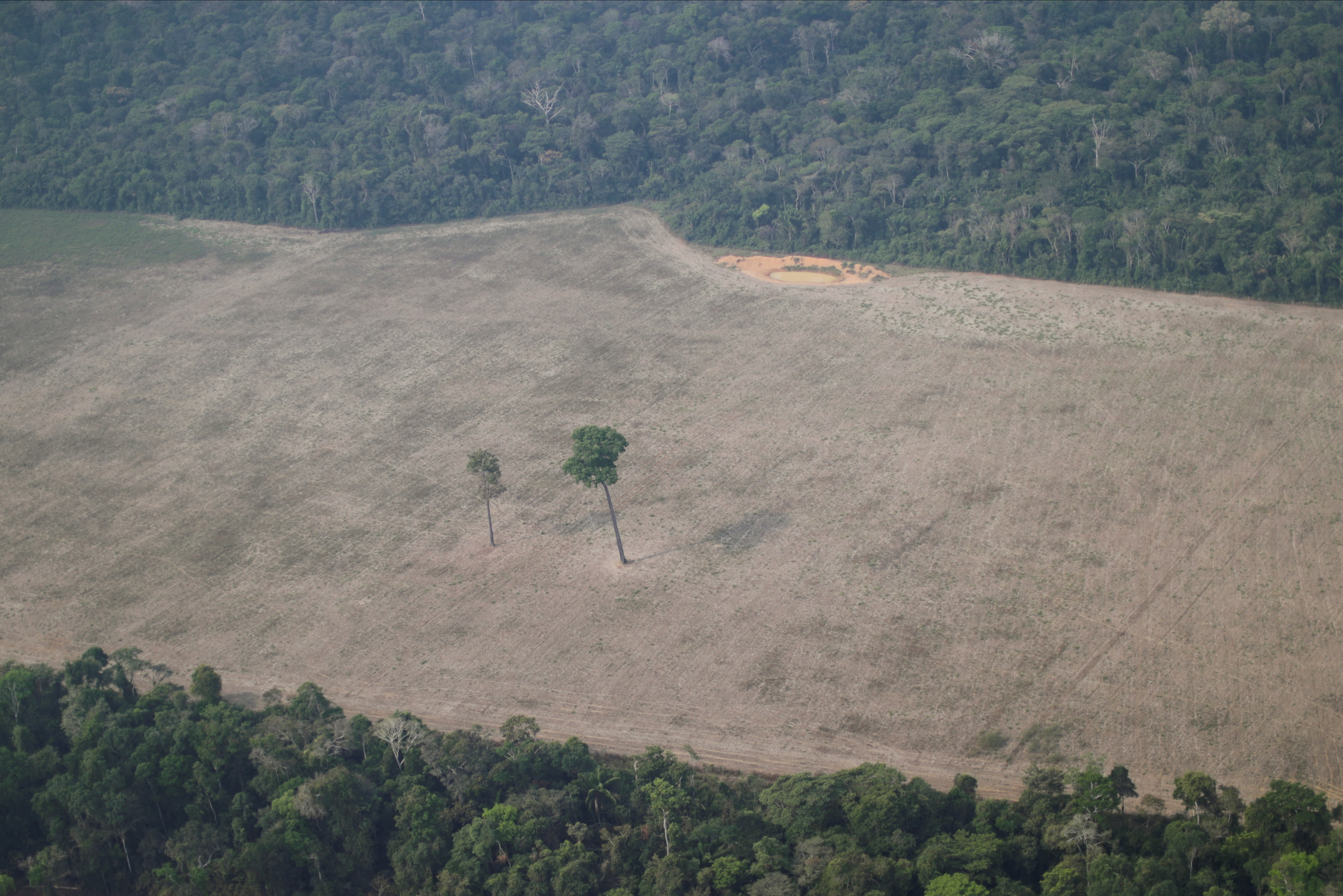 An aerial view shows a tree at the center of a deforested plot of the Amazon near Porto Velho, Rondonia State, Brazil August 14, 2020.