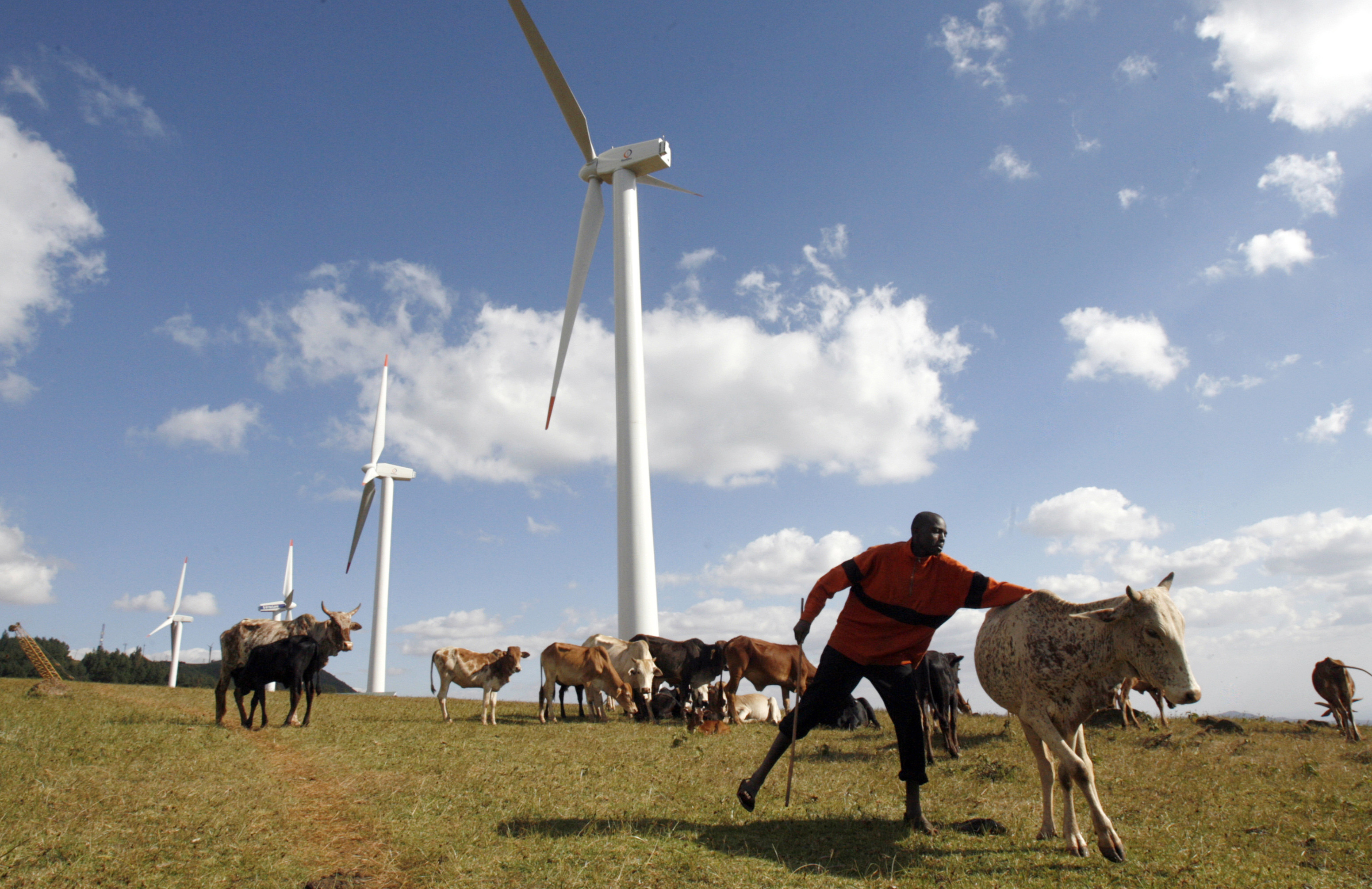 A Masaai herdsman looks after his cattle near the power-generating wind turbines at the Kenya Electricity Generating Company