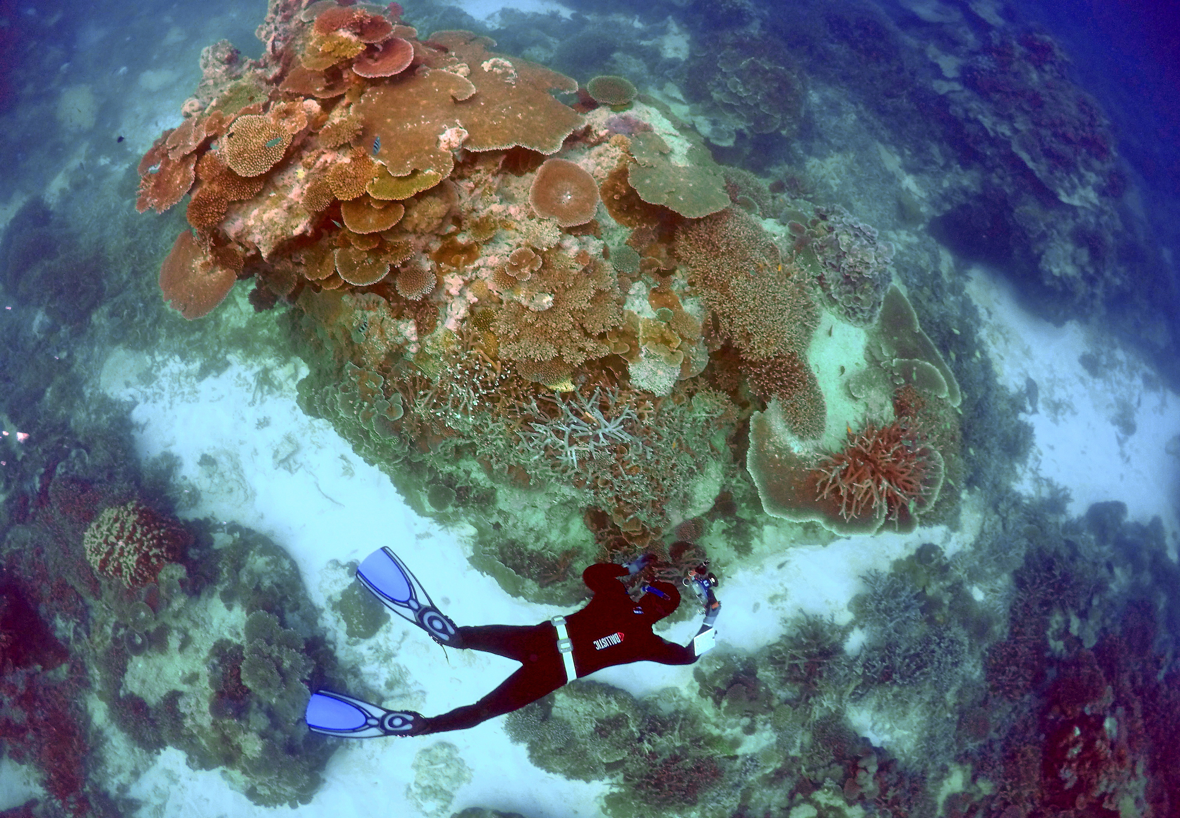 A diver swims over the great barrier reef, an ecological sites that is popular with tourists
