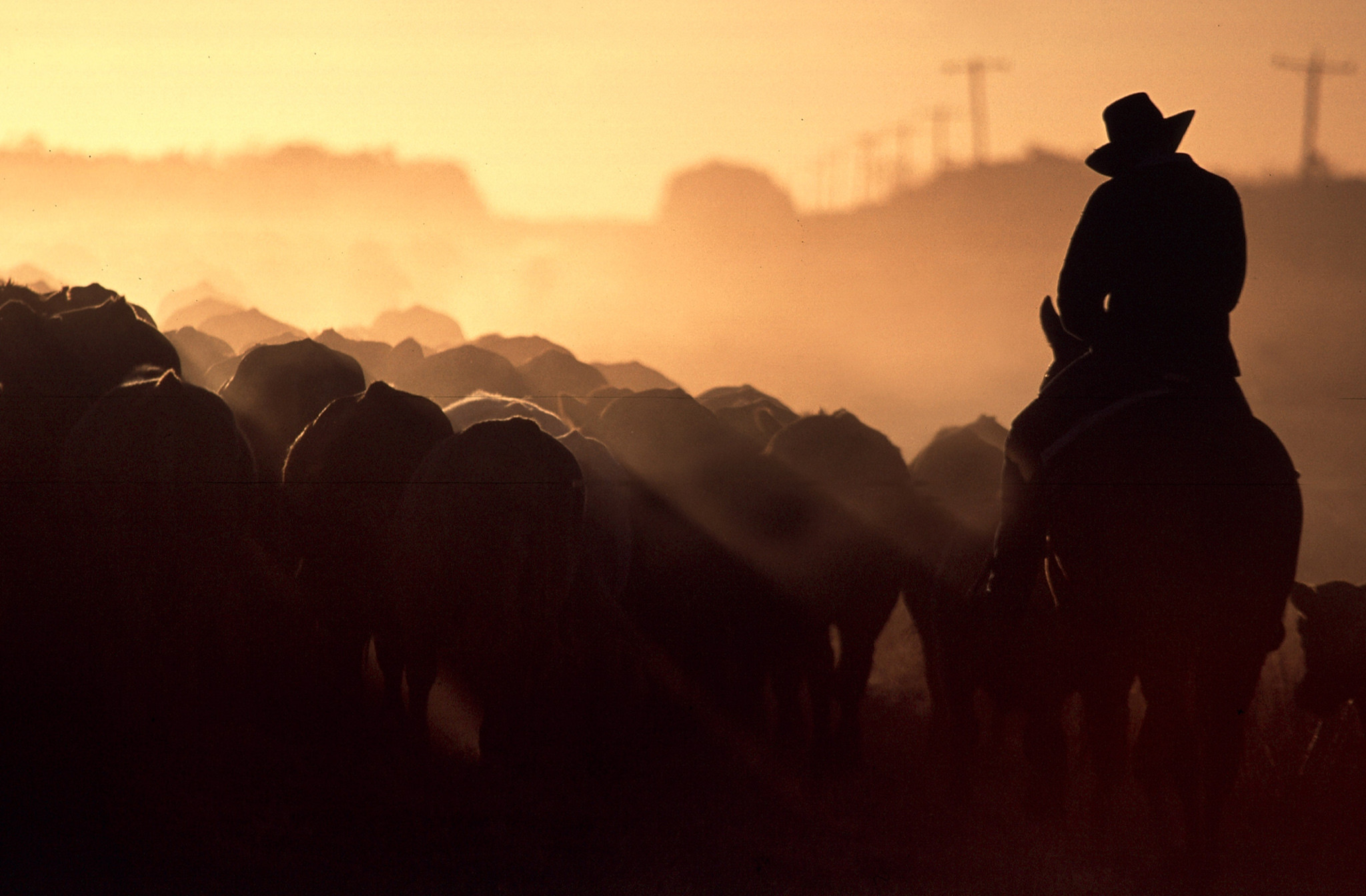 a farmer rides his cattle in a silhouette picture