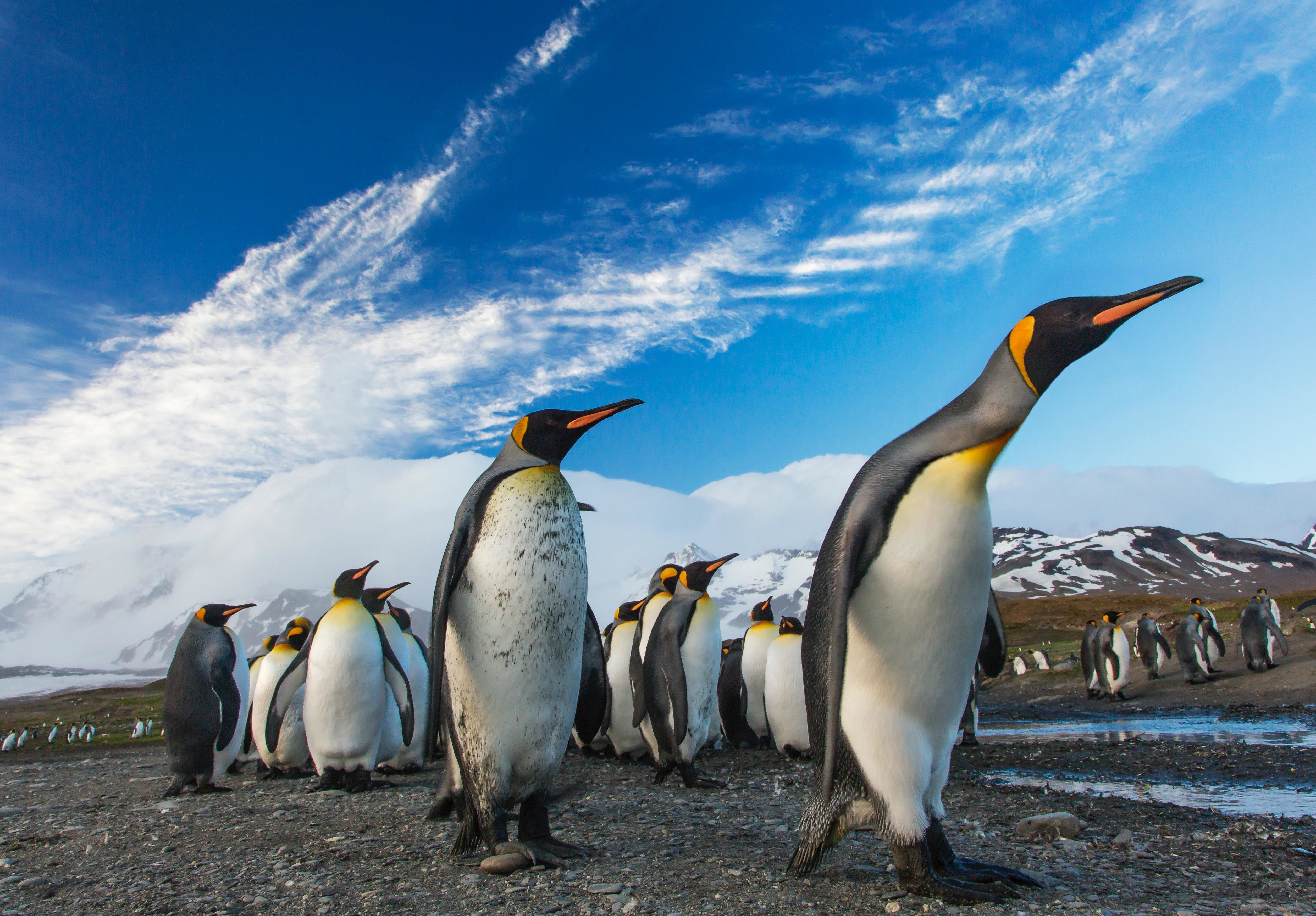 emperor penguin colonies endangered species act protection climate change environment sea land ice global warming extinction government policy trade shipping routes