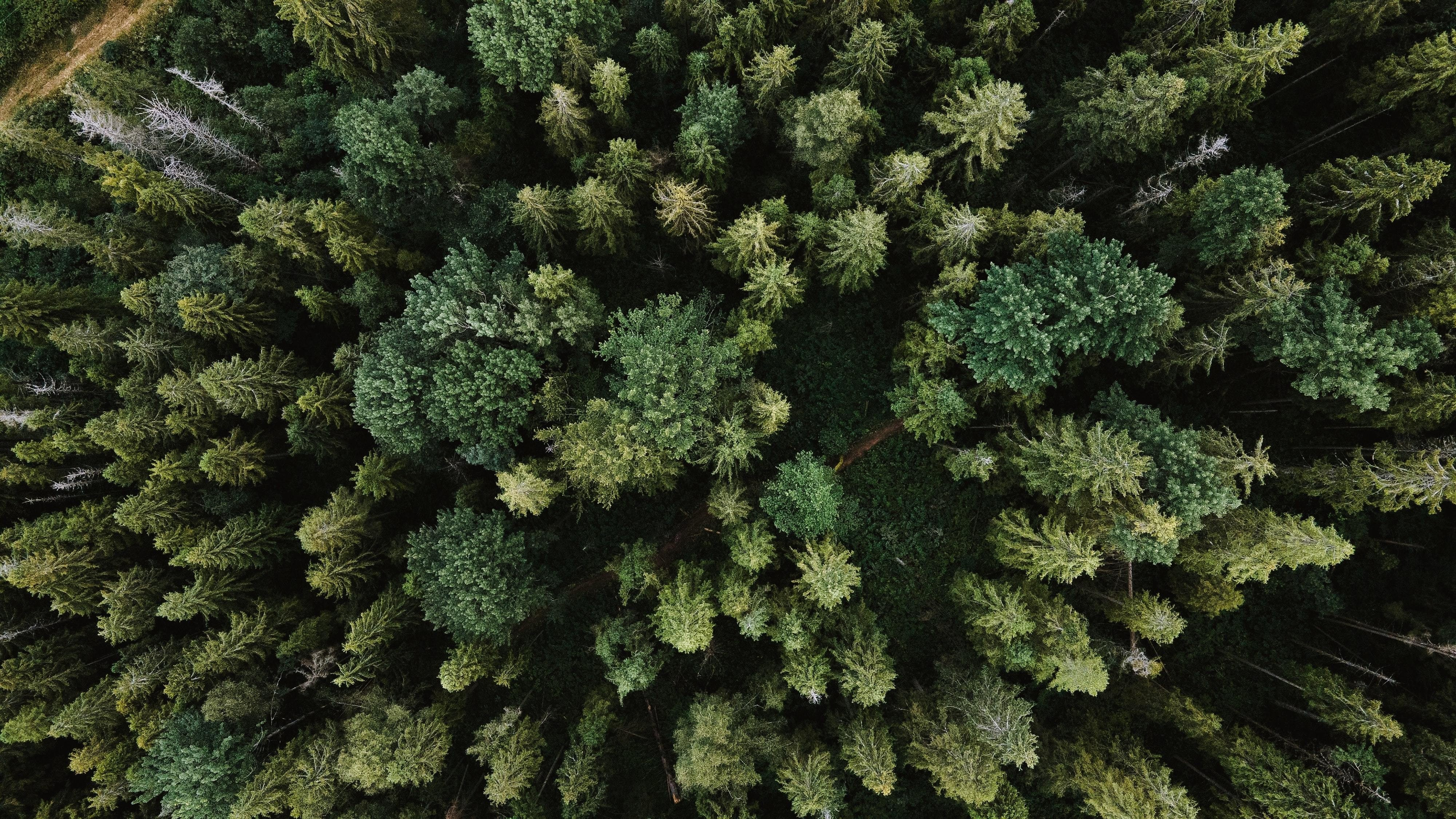 Aerial shot of forest.