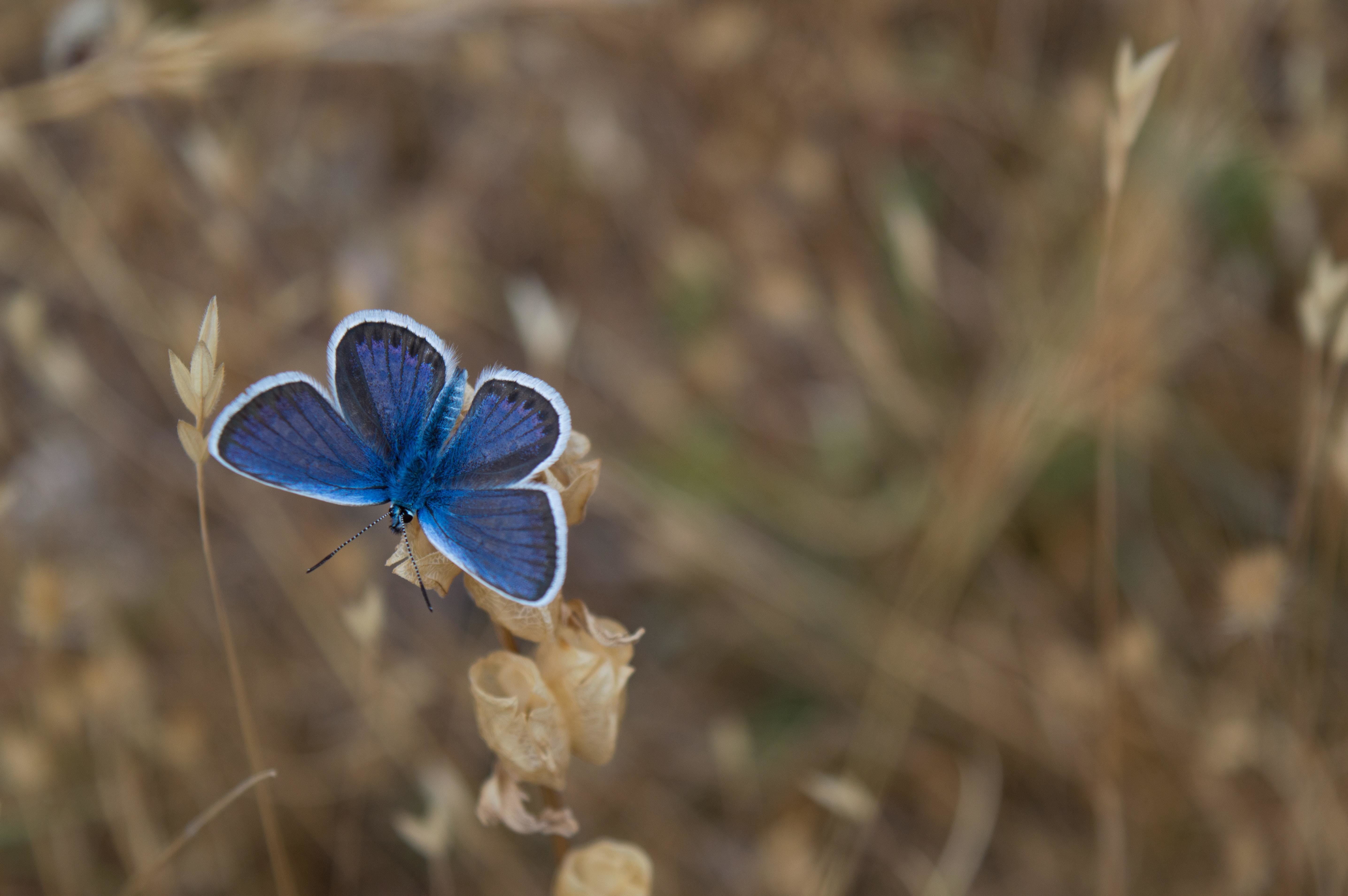 Pollinators, like this butterfly here, are responsible for the survival of some crops, but not all of them.