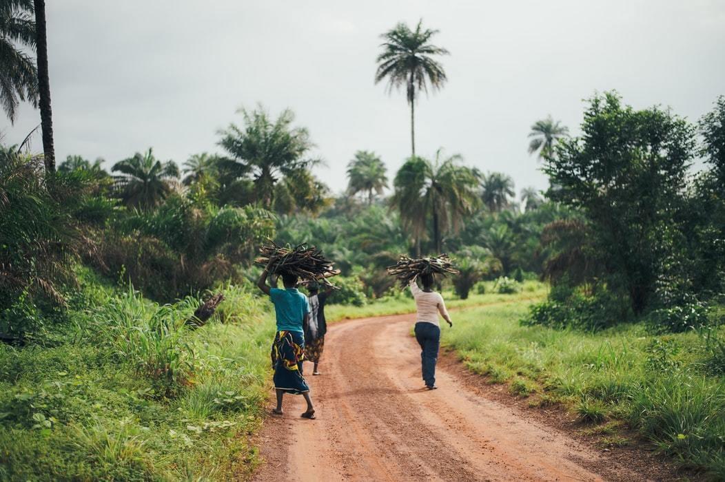 Women collect firewood in Sierra Leone.