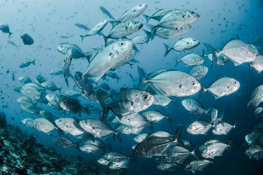Fish fishing food conservation yield MPAs marine protected areas