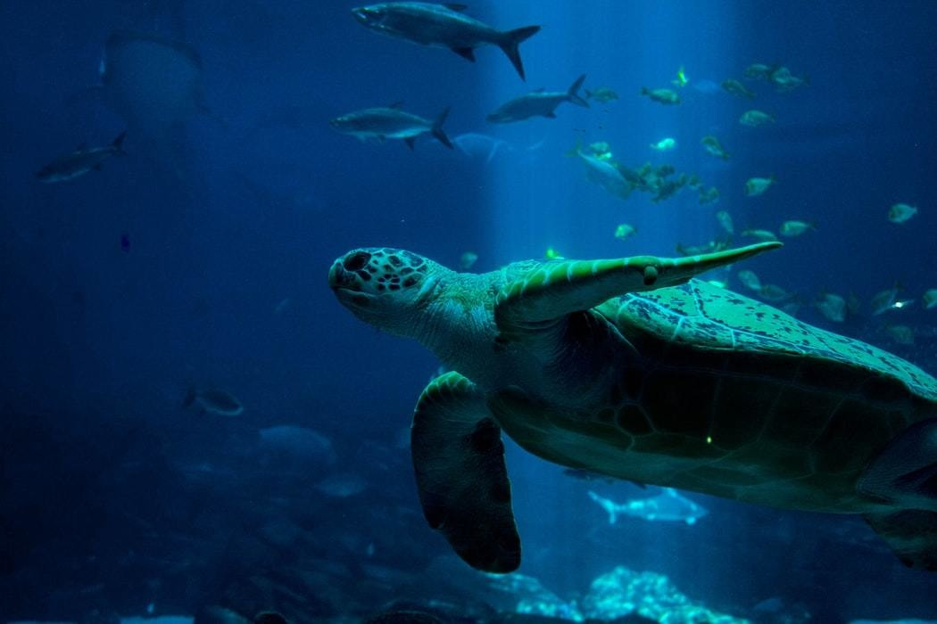 image of a sea turtle and other ocean life