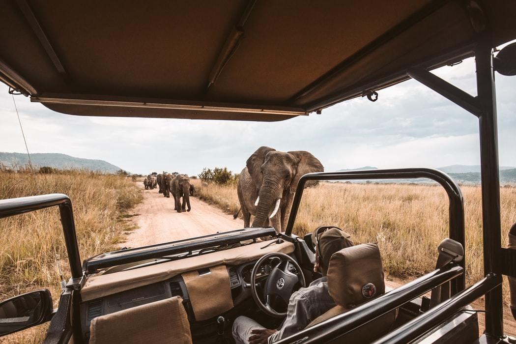 Elephants on an African safari game drive.