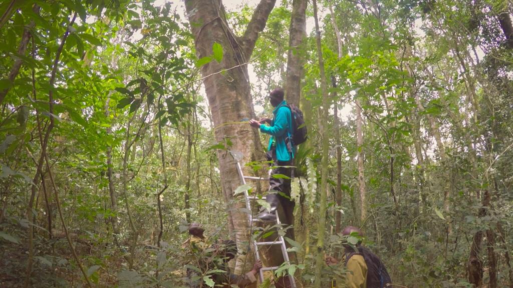 research collaborators measure tree stem diameter and height in Uganda's Bwindi Impenetrable National Park